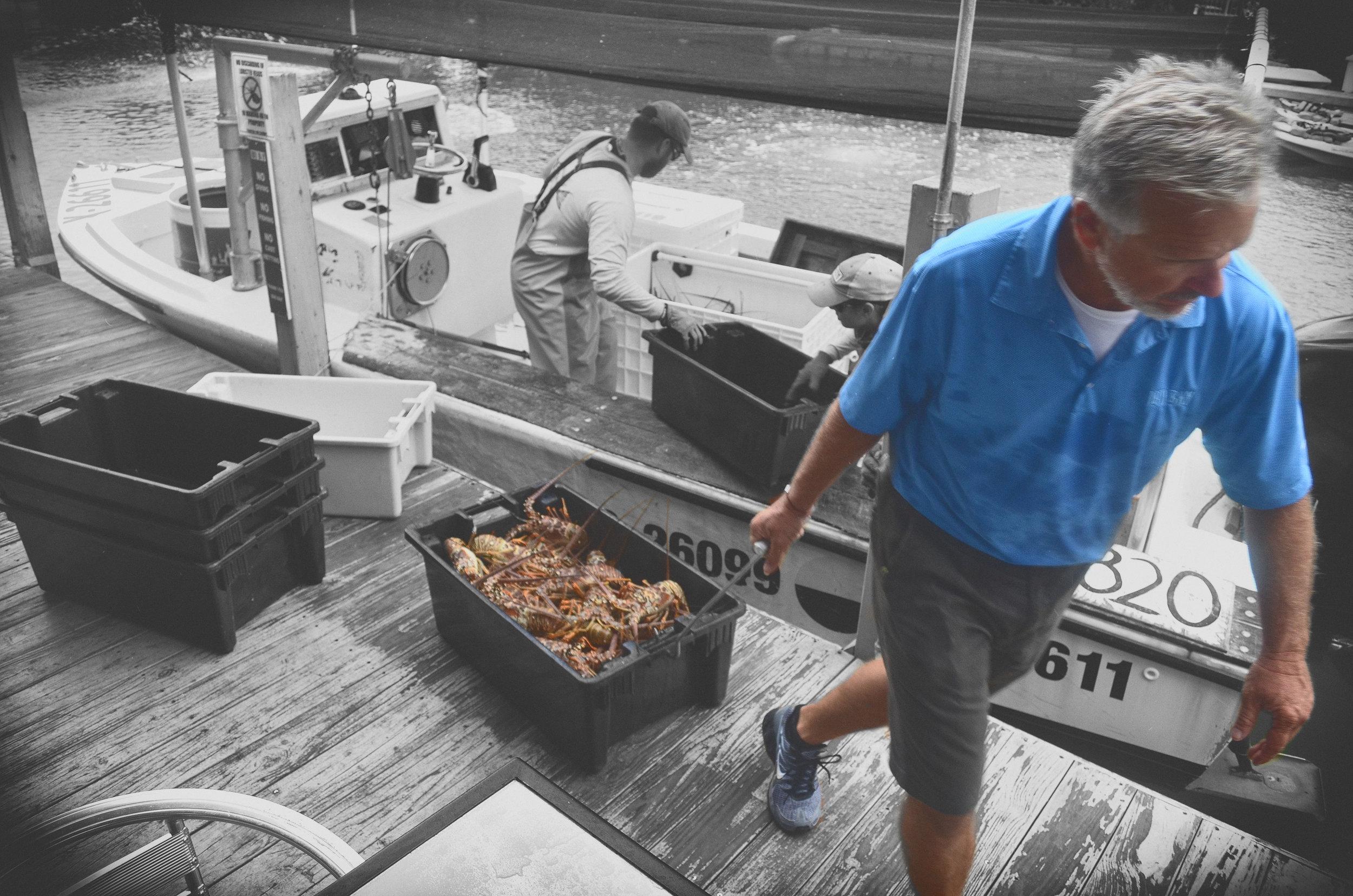 Tony Osborn Pulling Lobster.jpg