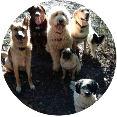 Group dog walker in Oakland and Berkeley.