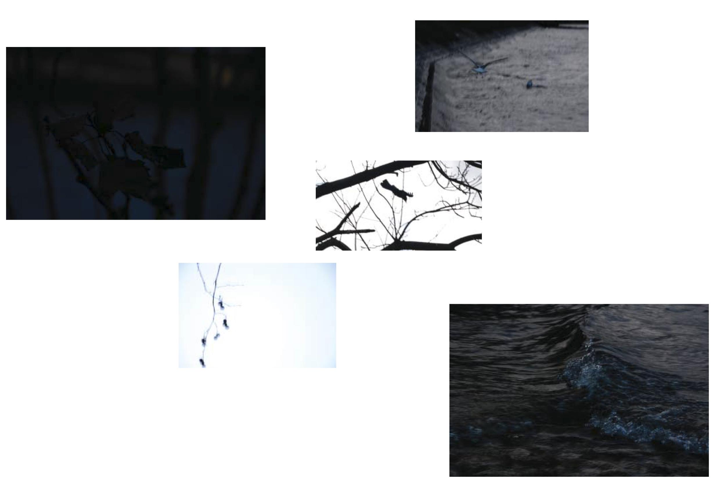 """© Leïla Lakhal : Des images """"sans faire exprès"""", presque involontaires, puis élues."""
