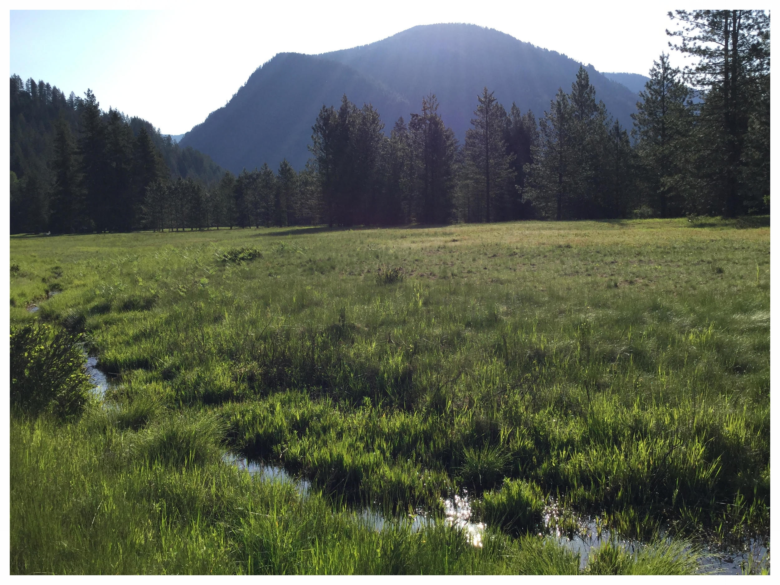 Moose Meadow Farm Meadow