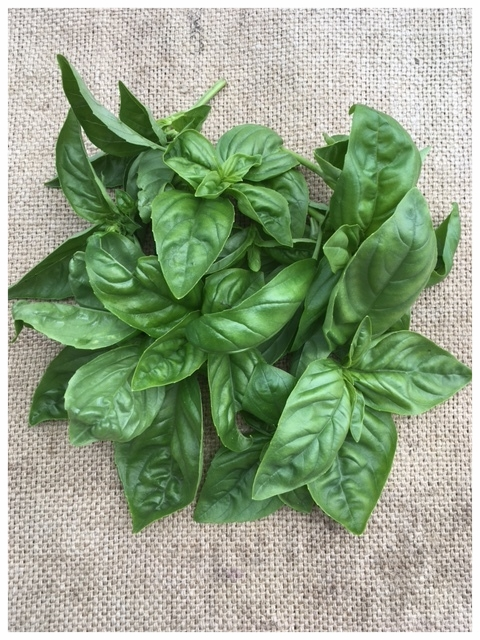 Basil tops ready for CSA members