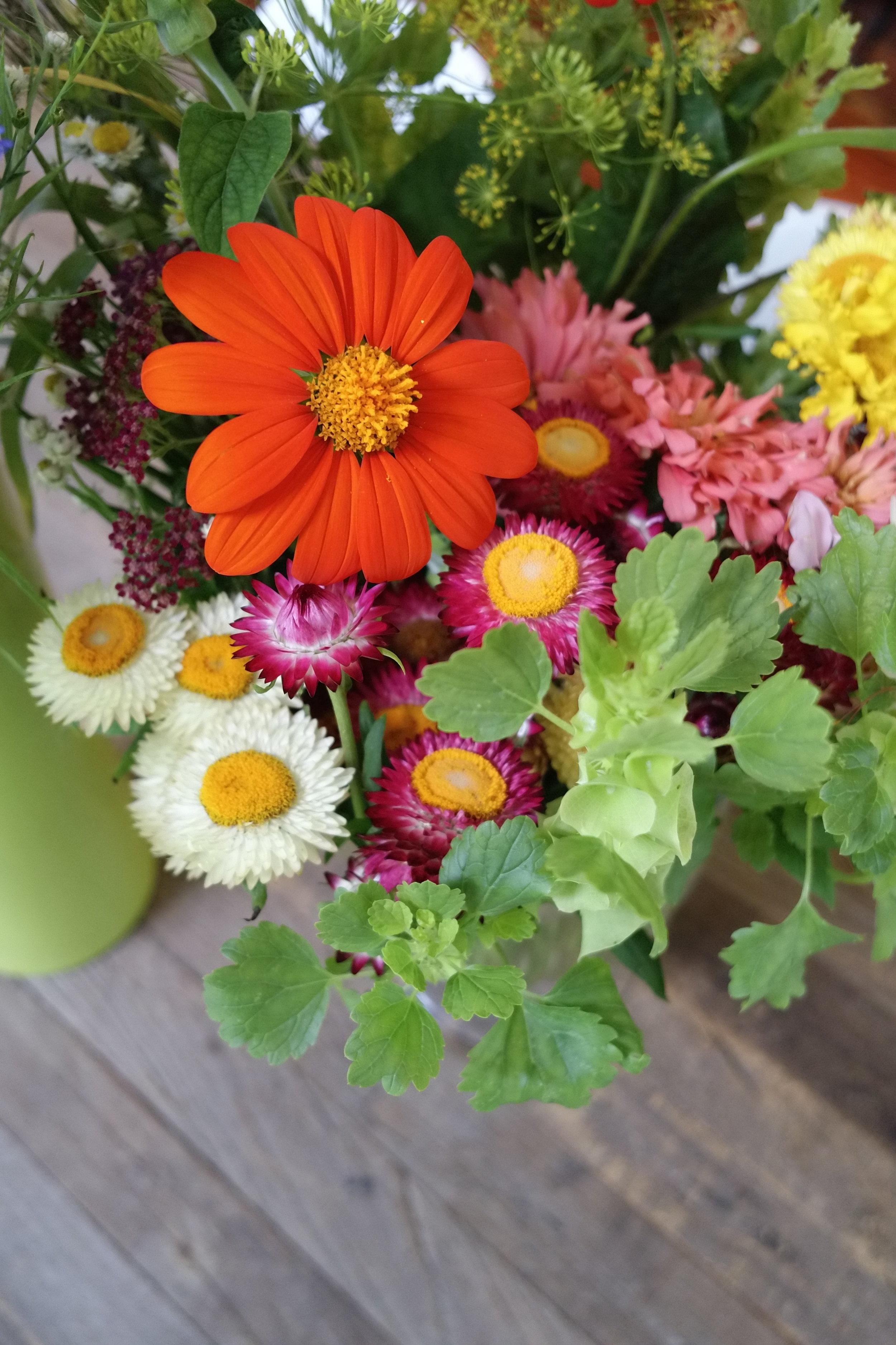 Tithonia & Strawflowers