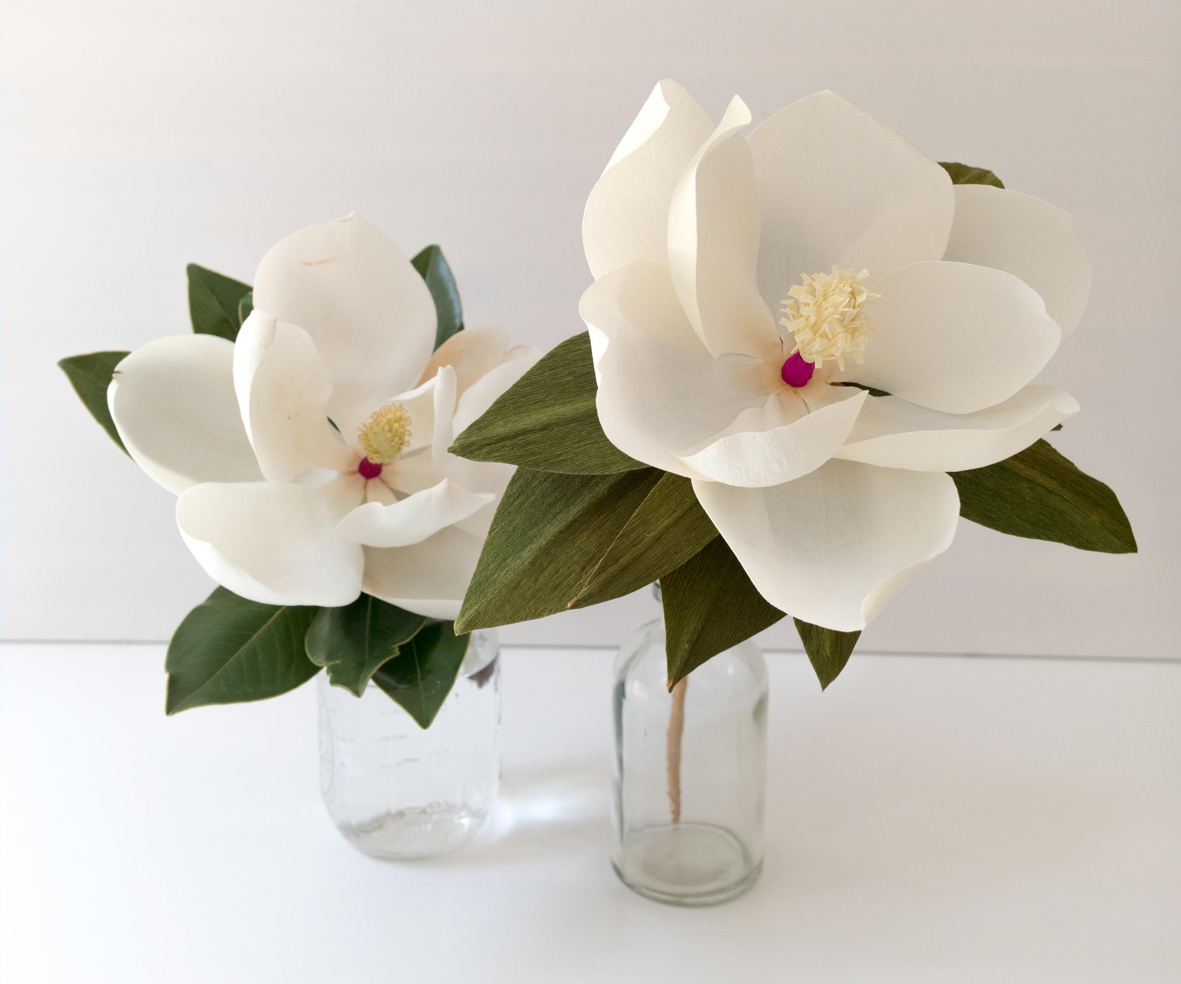 Magnolia_Header.jpg