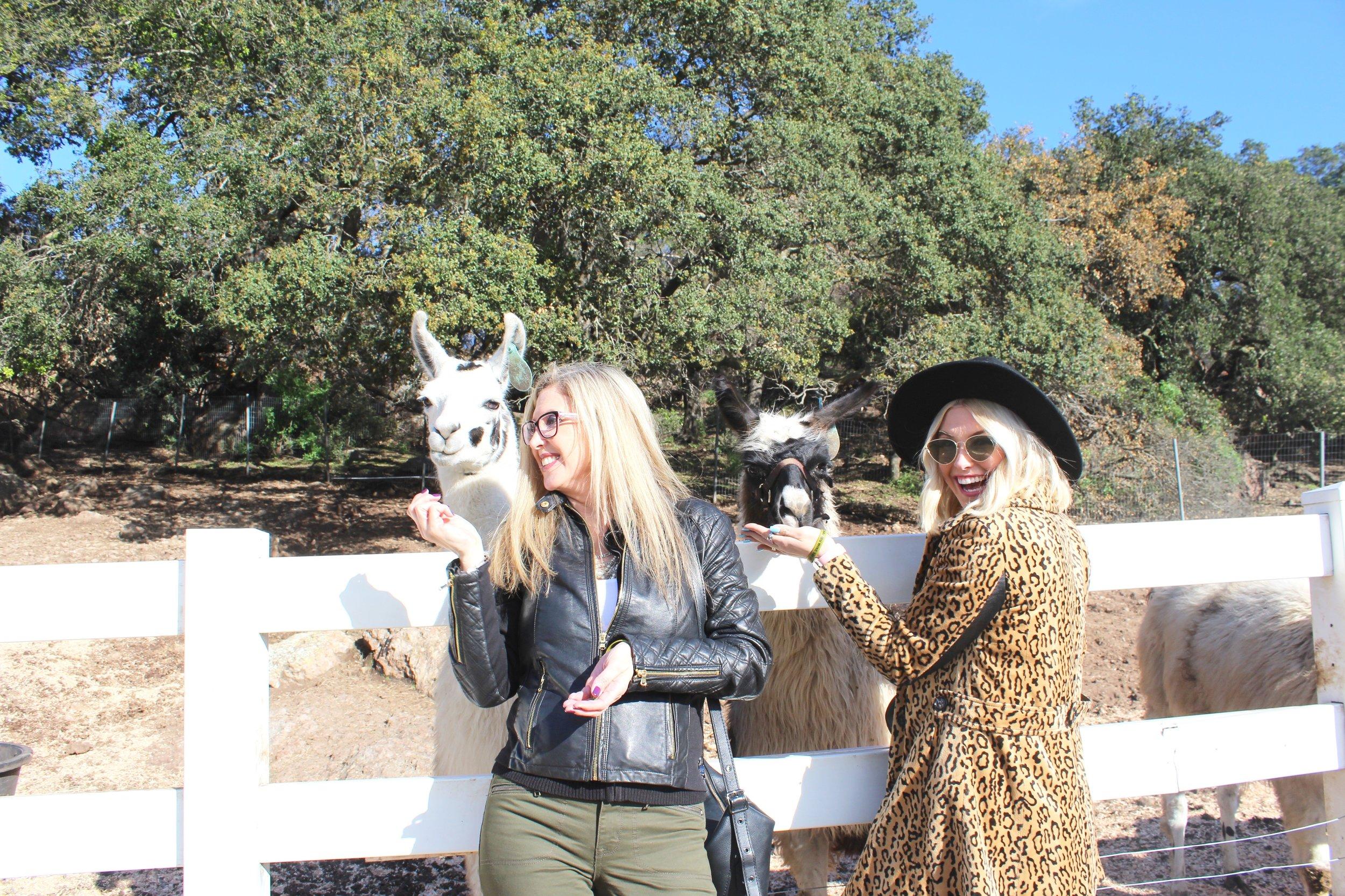 Meet my Mama, and two very sweet Llamas! Kendrick Llama (left) and Llama Del Rey (right)