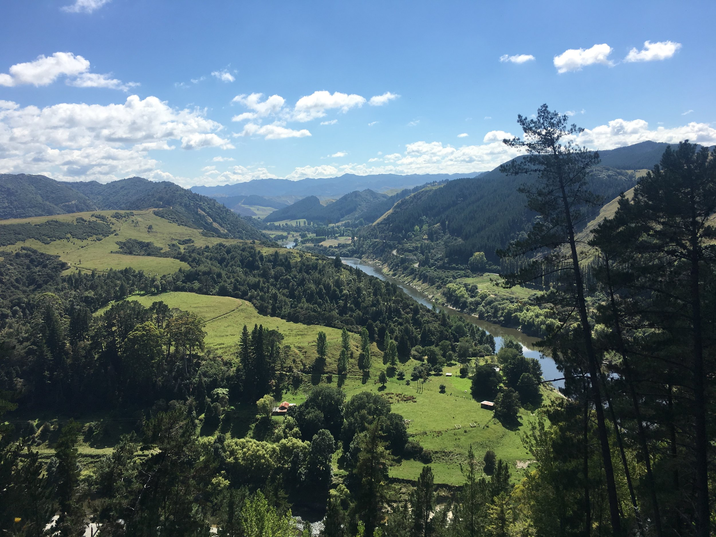View of the Whanganui River from the top of the hill
