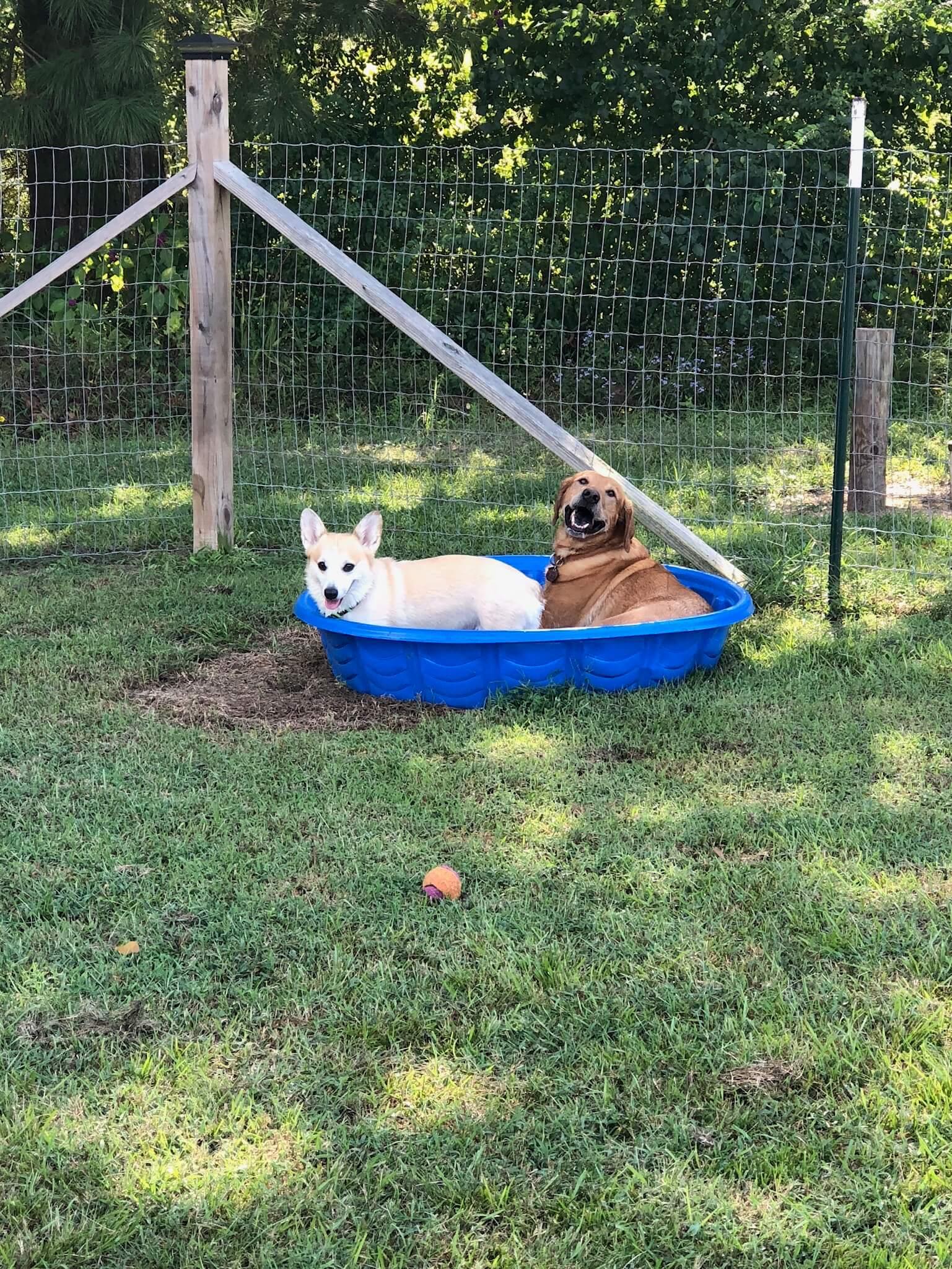 - -Jake & Mushu enjoyed lots of pool time this summer