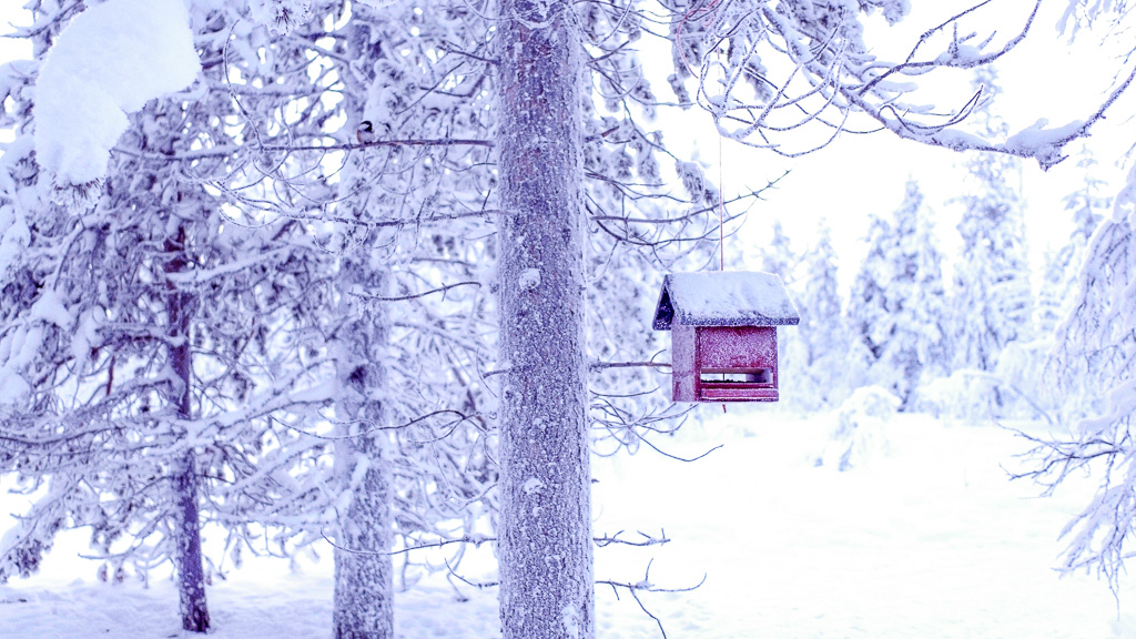 winter wonderland bird house.jpg