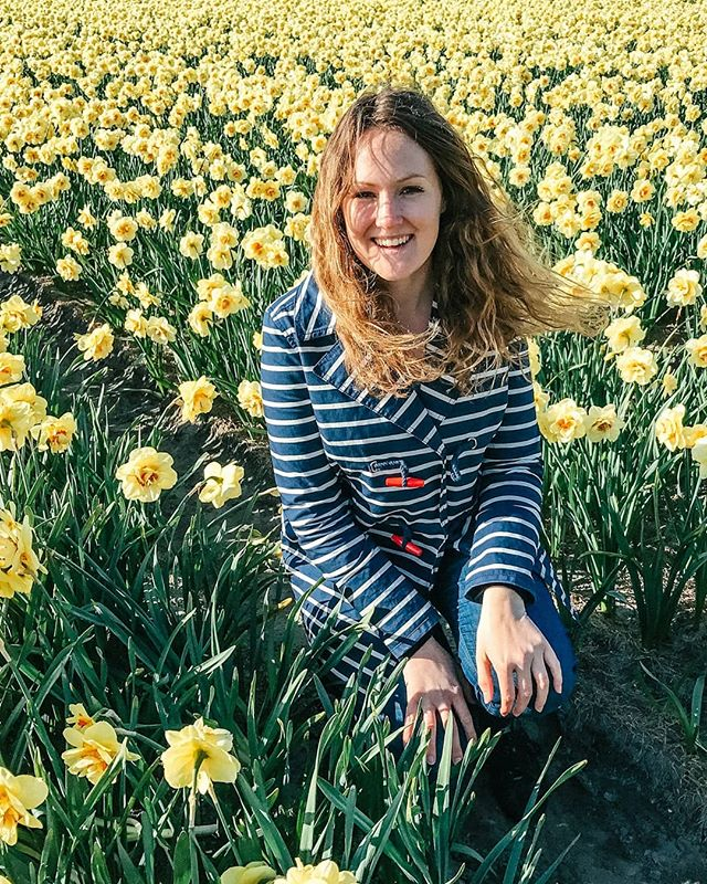 Did you know that there are not only tulip fields in the Netherlands, but also daffodil fields? I think they deserve some credit too 🏵️😍 . . . . . #daffodils #topolindratravels#dirtybootsmessyhair #youmustsee#letsgoeverywhere #traveltagged#dirtybootstravel #thediscoverer#darlingescapes #sidewalkerdaily#sheisnotlost #seetheworld#traveladdicts #travelnow#loveandwildhearts #dametraveler#girlsdreamtravel #wearetravelgirls#ladiesgoneglobal #tulipfields #tulips🌷 #goereeoverflakkee#topamsterdamphoto #iamamsterdam#visit_netherlands #living_netherlands#bestofnetherlands