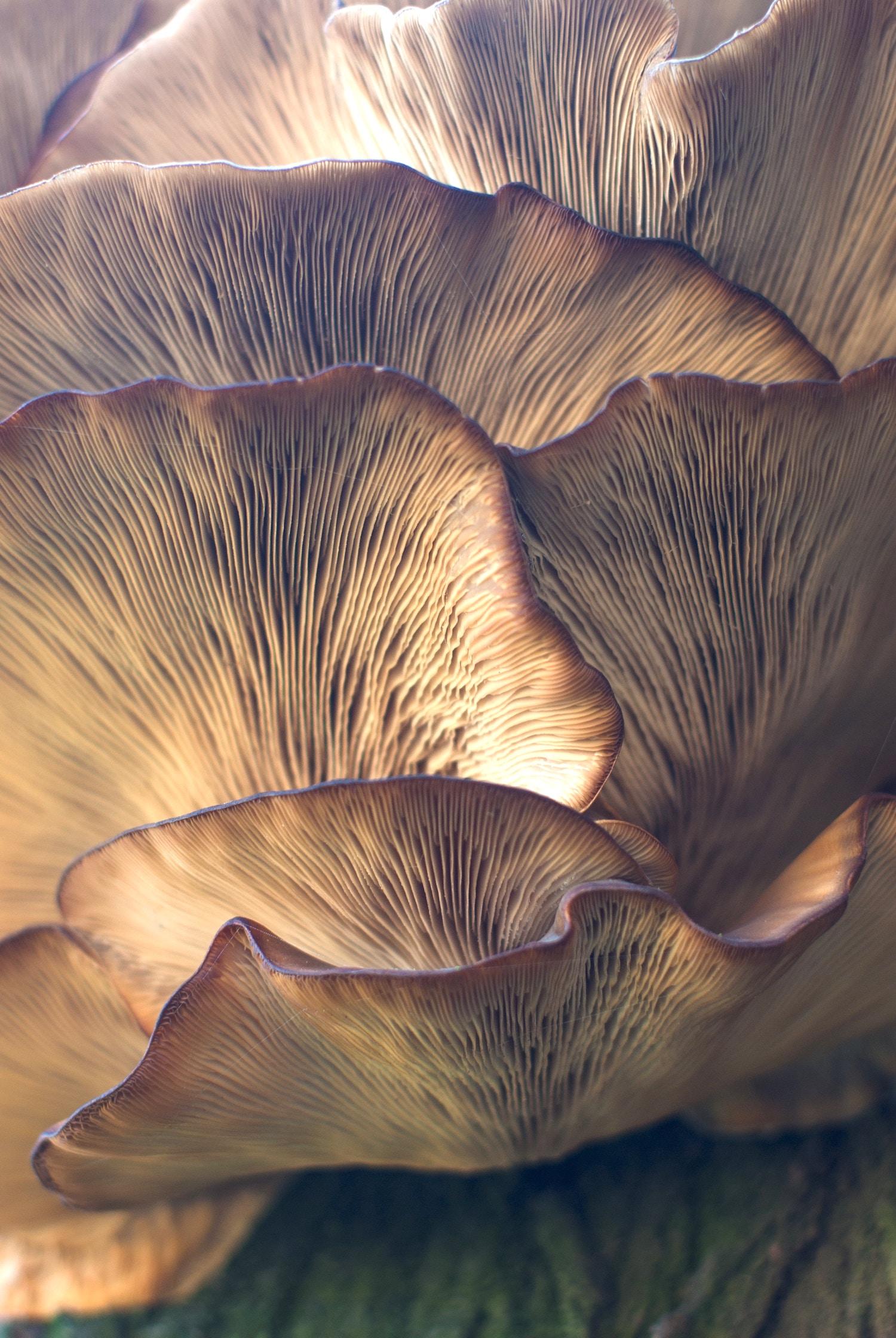 Oyster Mushrooms: Damir Omerovic, Unsplash.