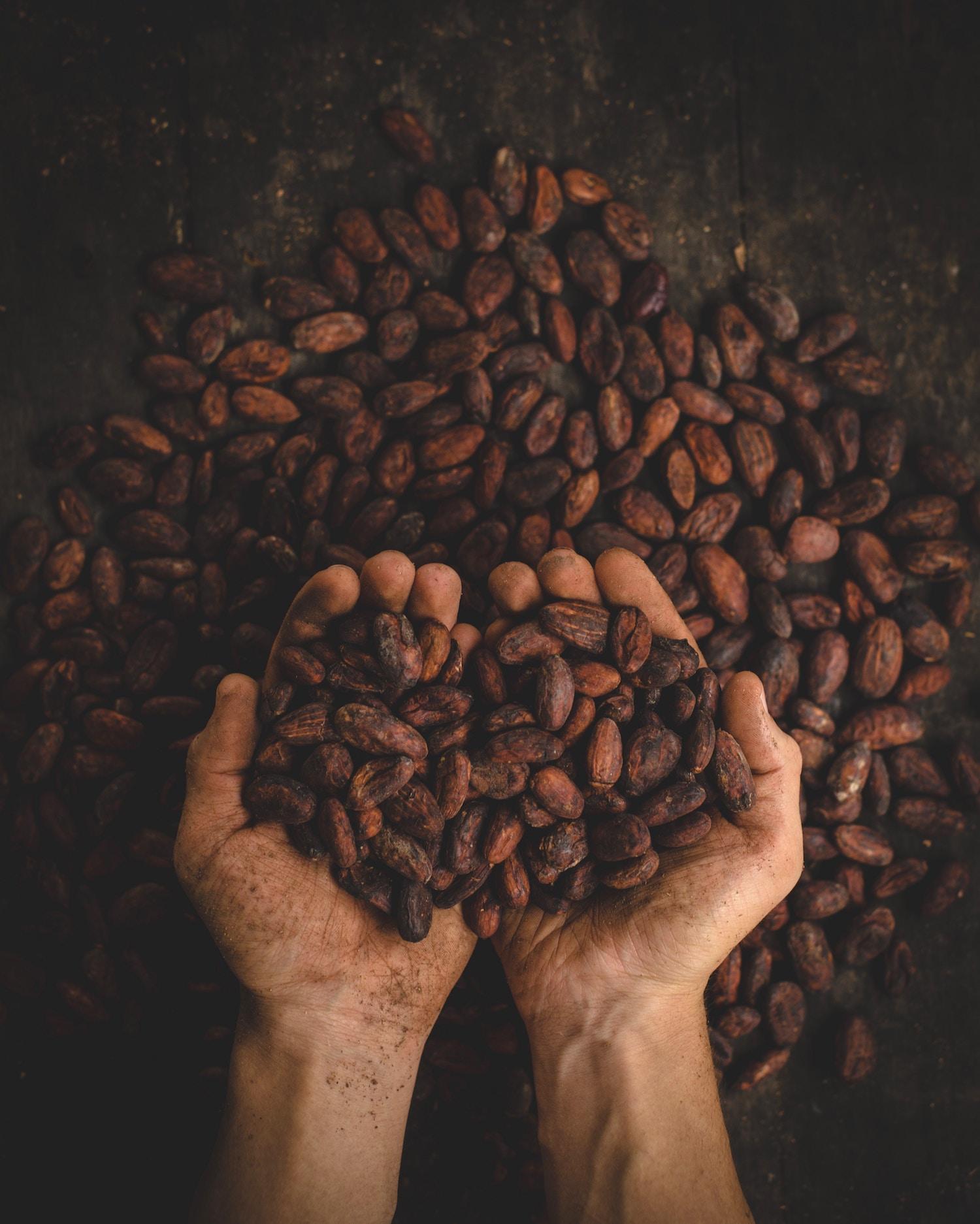 Cacao cacaophony: Pablo Merchan Montes, Unsplash.
