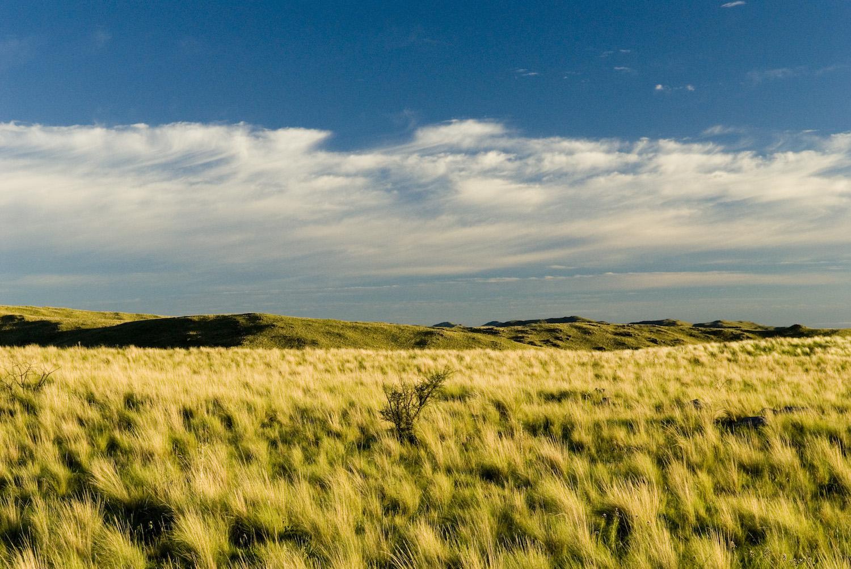 Pampas Grasslands of Córdoba Argentina