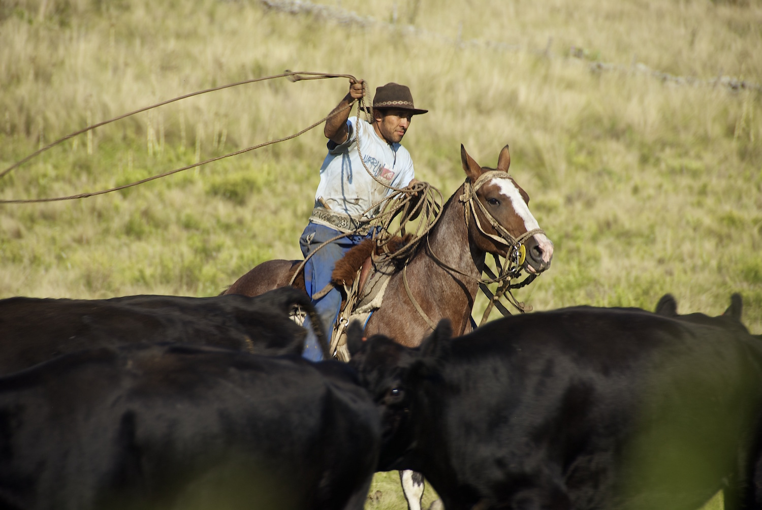Gaucho at Work at Estancia Los Potreros Ranch Argentina