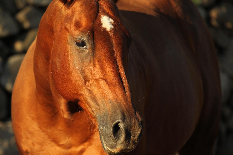 Apacero - Los Potreros Horse