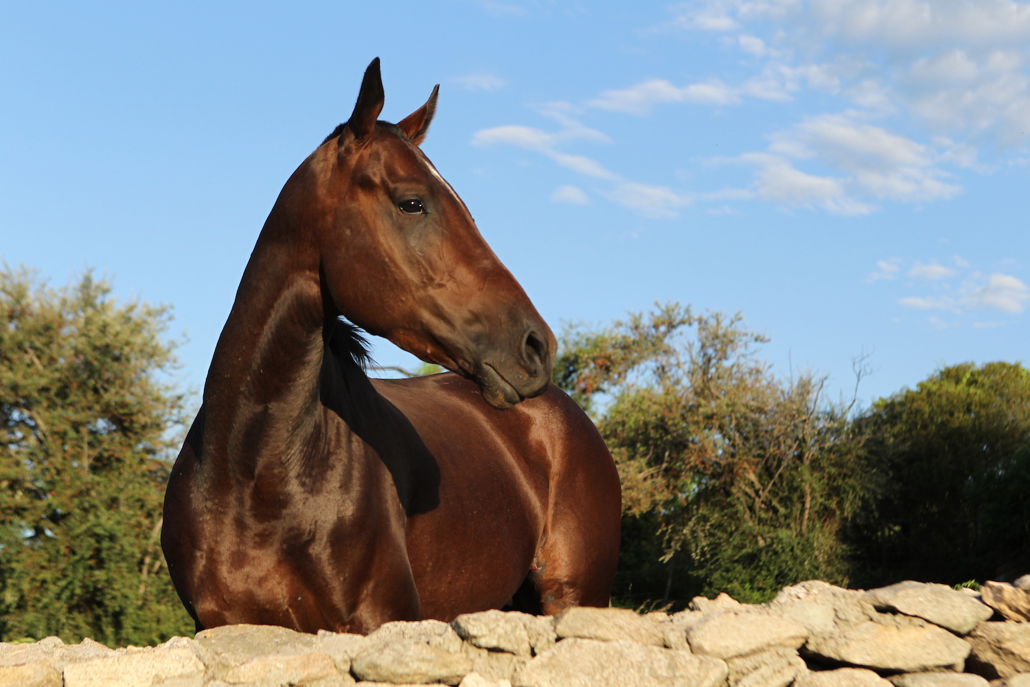 Carino, Stallion at Estancia Los Potreros