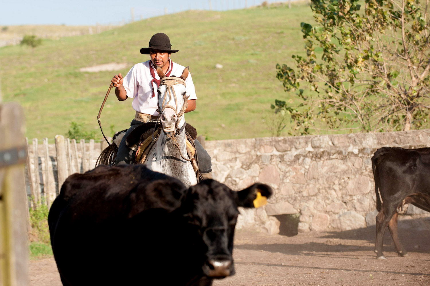 Gaucho on Horseback at Los Potreros