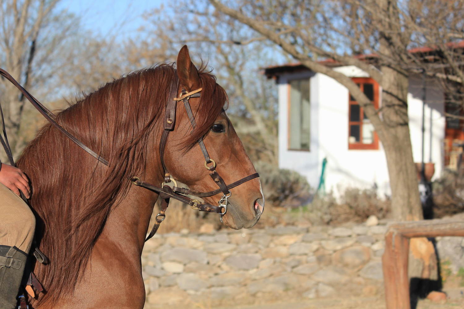 Horse from Estancia Los Potreros
