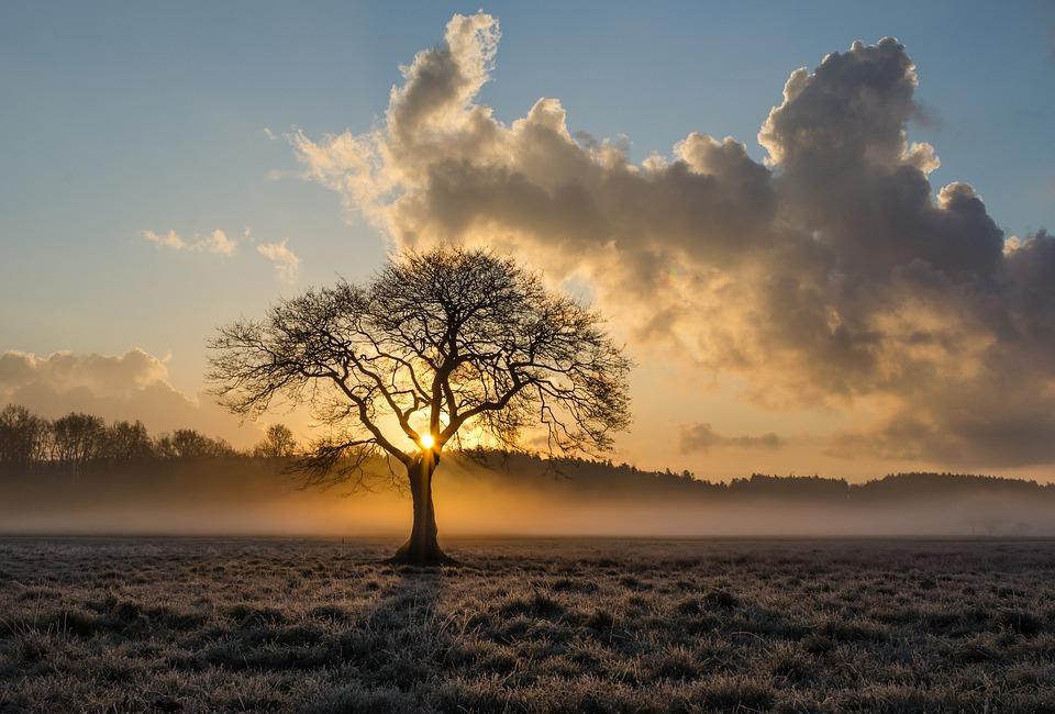lone-tree-1934897_960_720.jpg