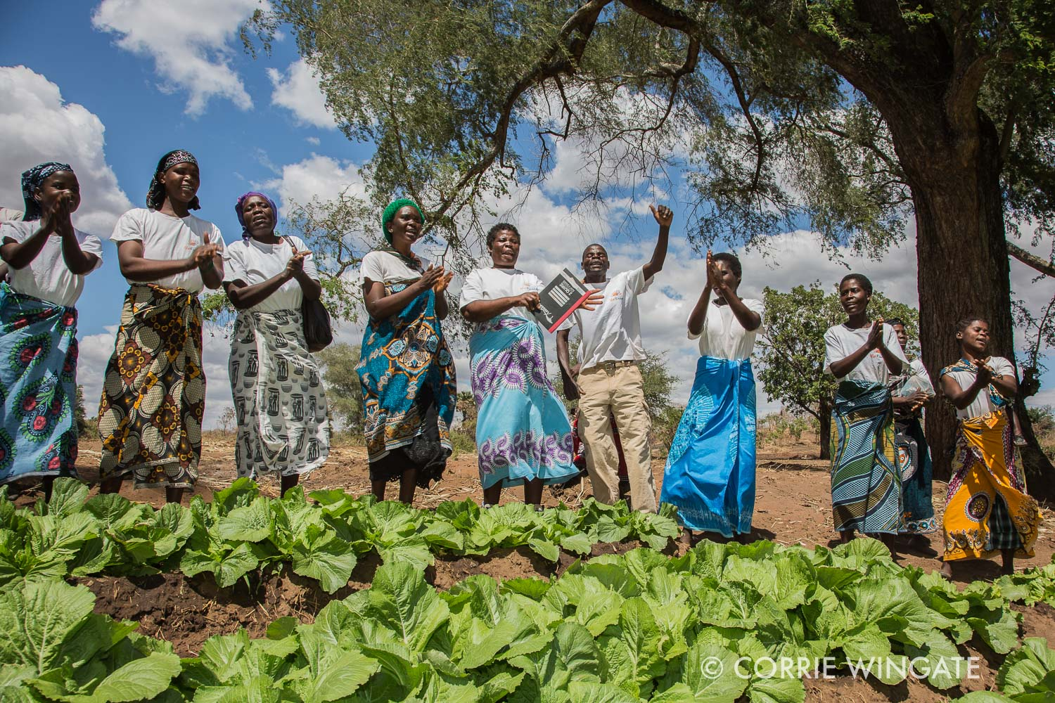 Vegetable garden grown by the Msonthe WG, Salima district, Malawi