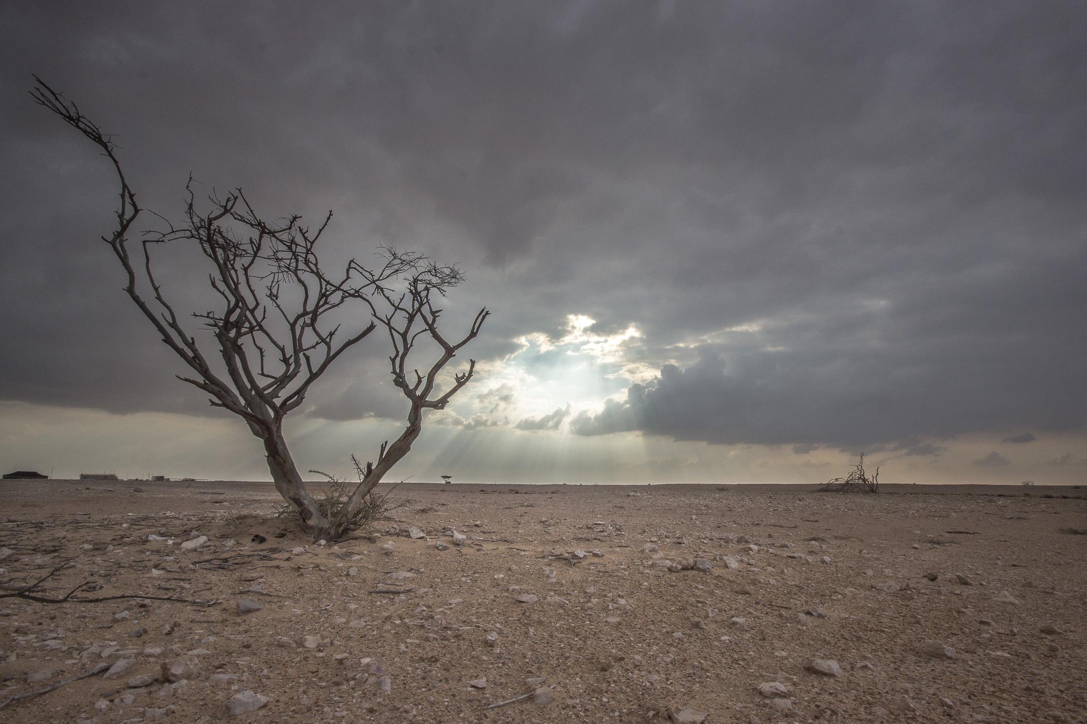 dead-tree-1_8345893479_o.jpg