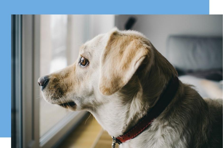 dog alone at home