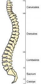composants-colonne-vertebrale.jpg