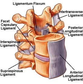 ligaments-BB.jpg