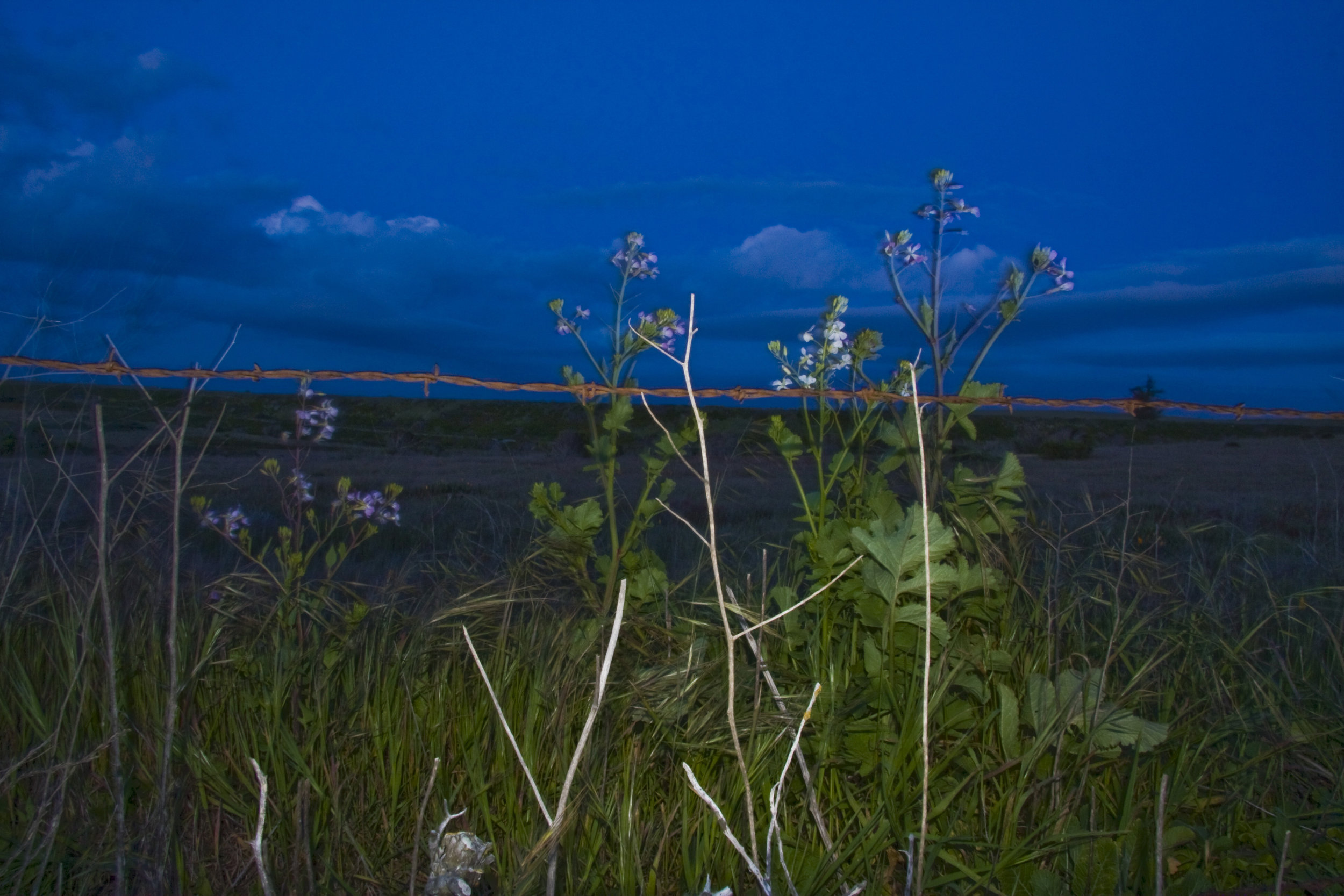 Lapis Road Nightfall