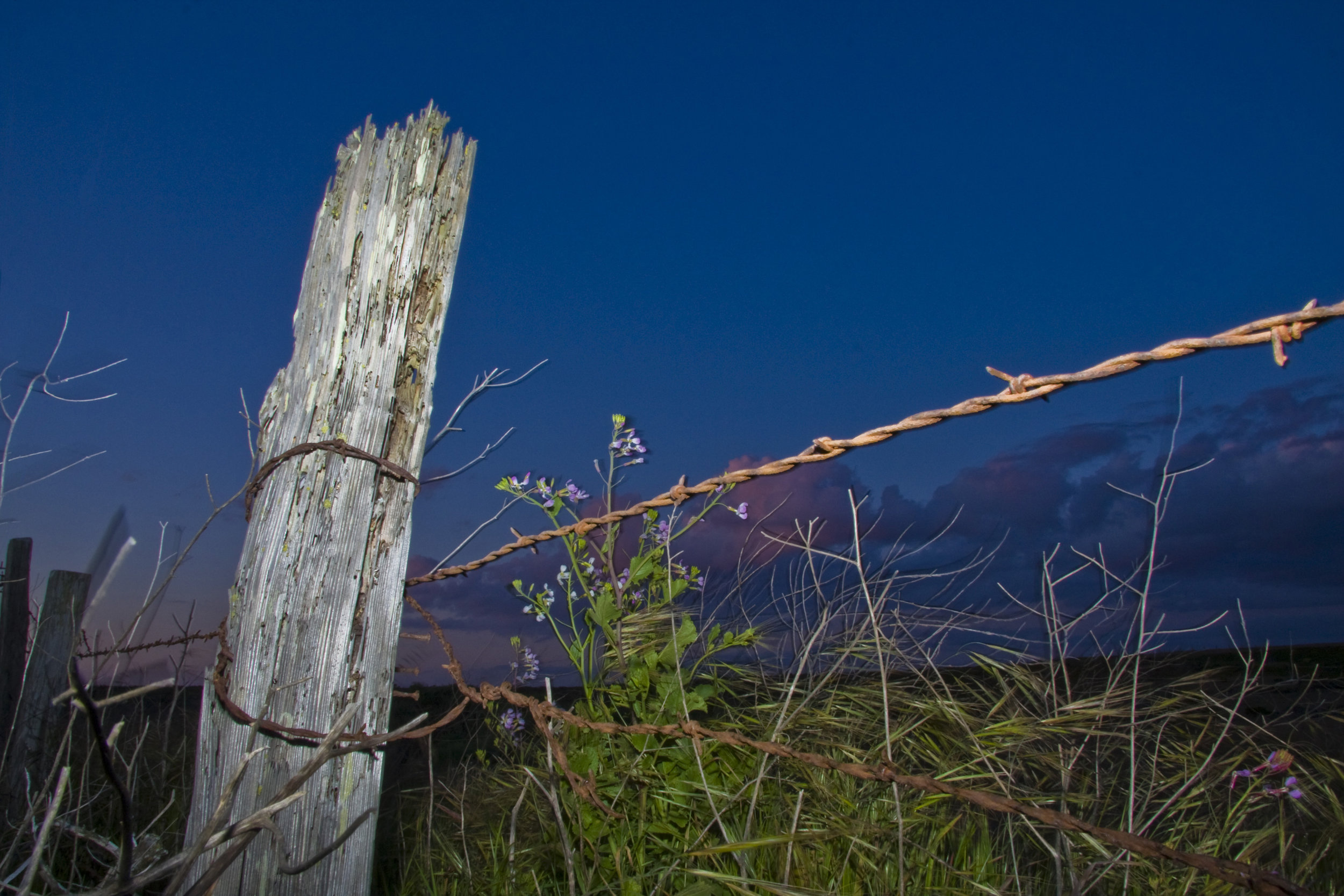Armstrong Ranch Fencepost at Night