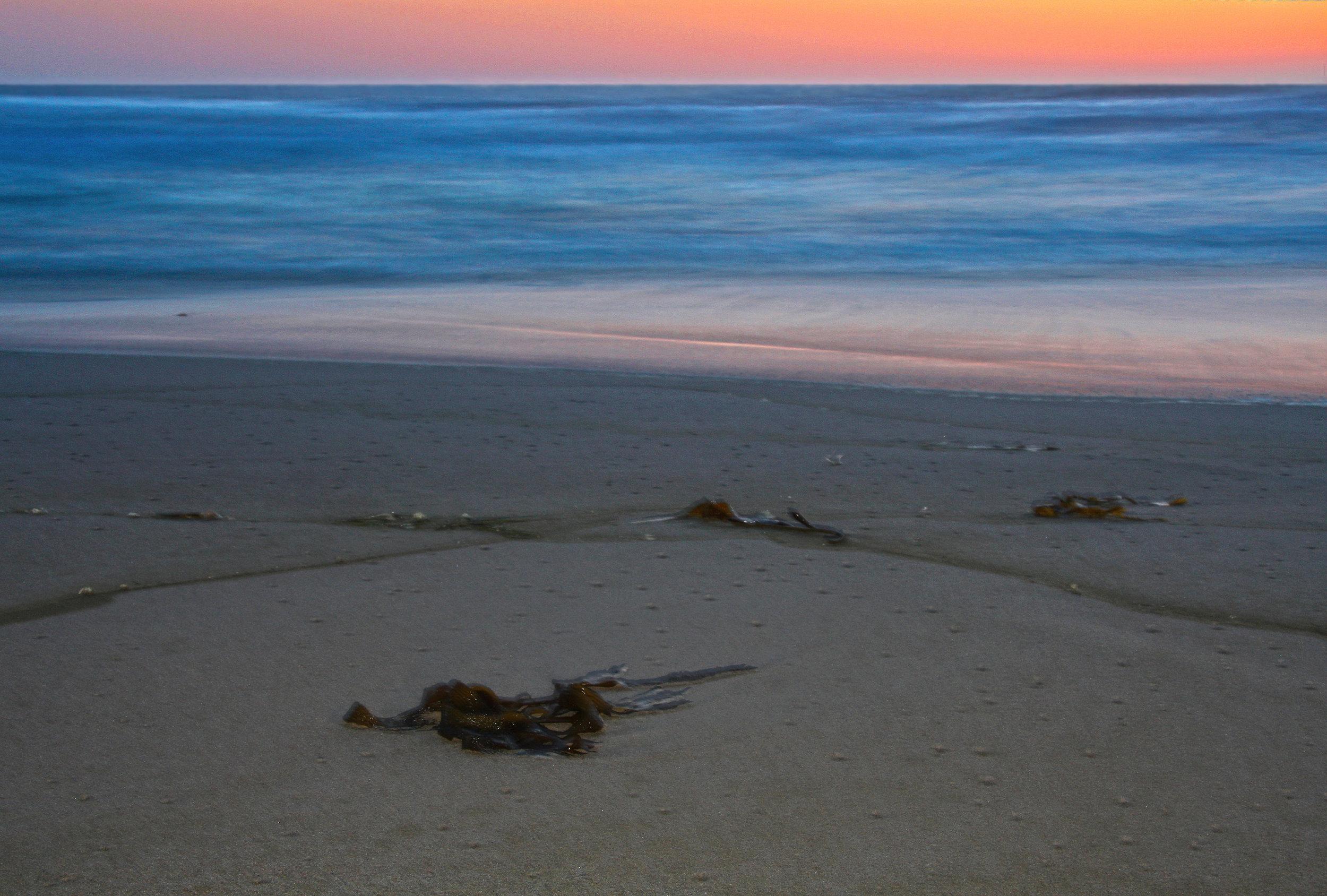 Kelp At Sunset II