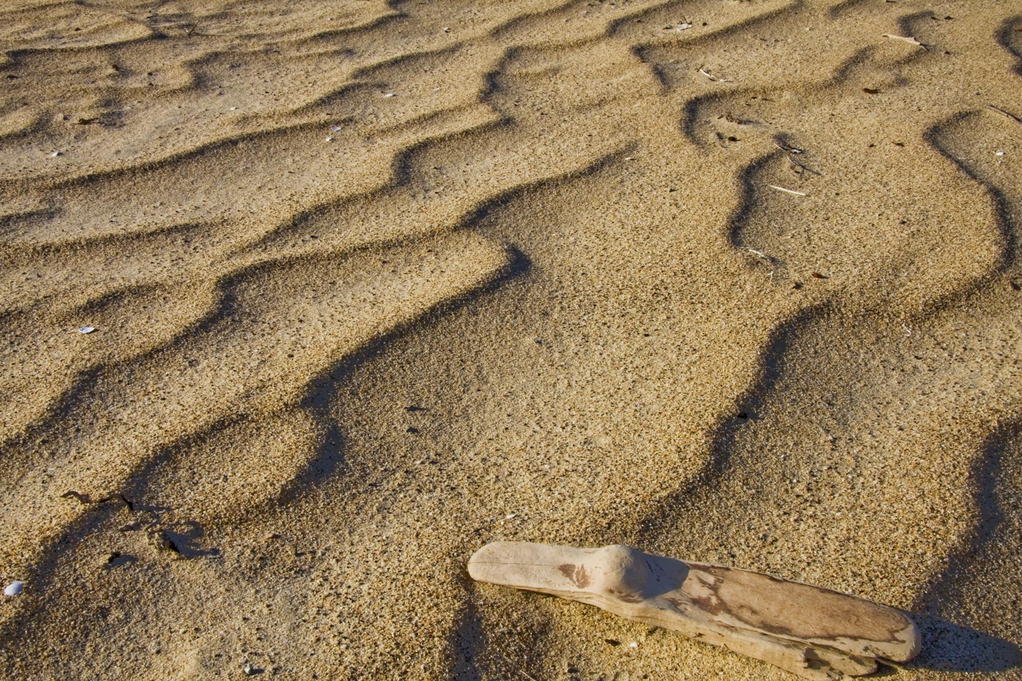 Dirftwood Sand Ripples