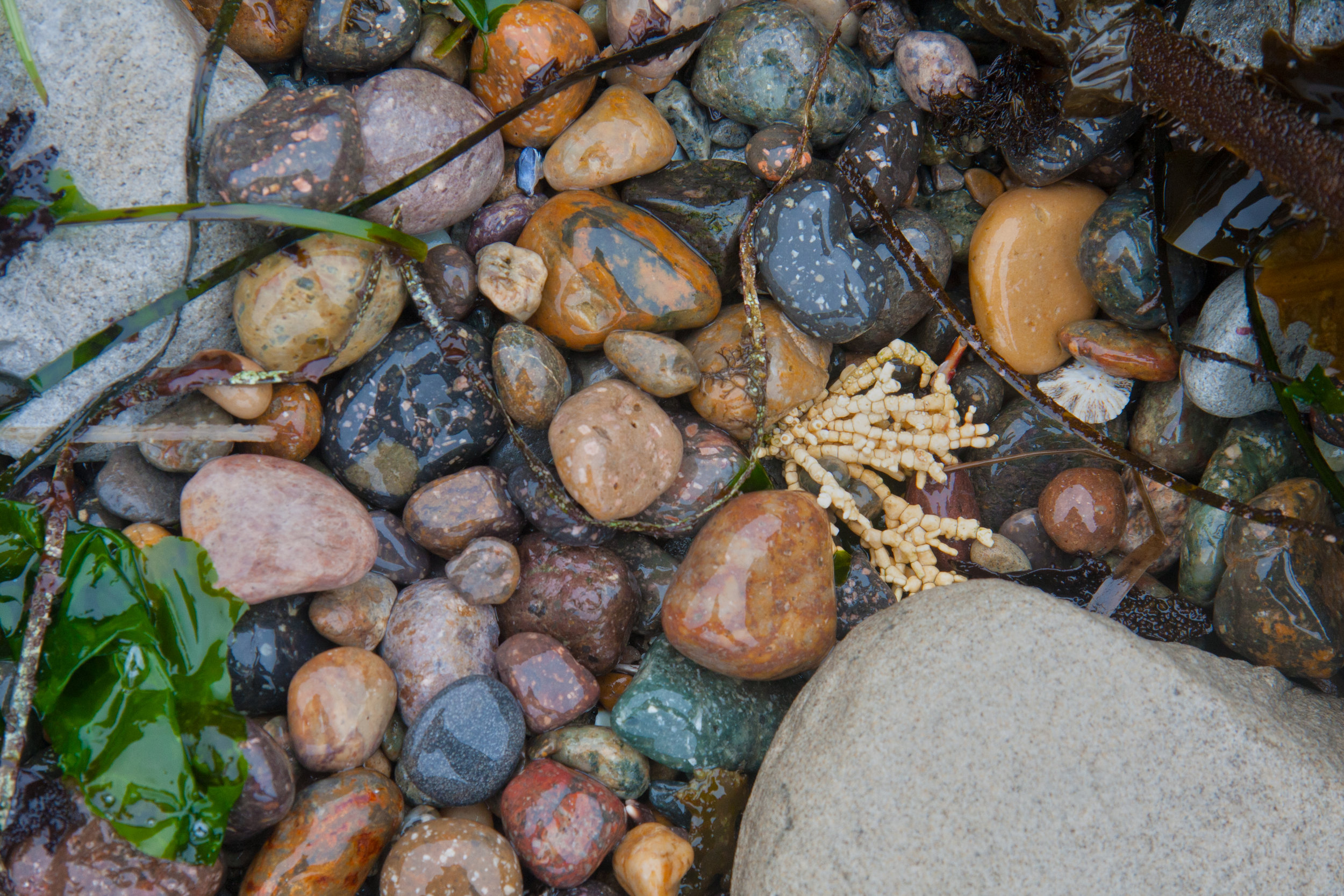 coralAndWetPebbles01.jpg