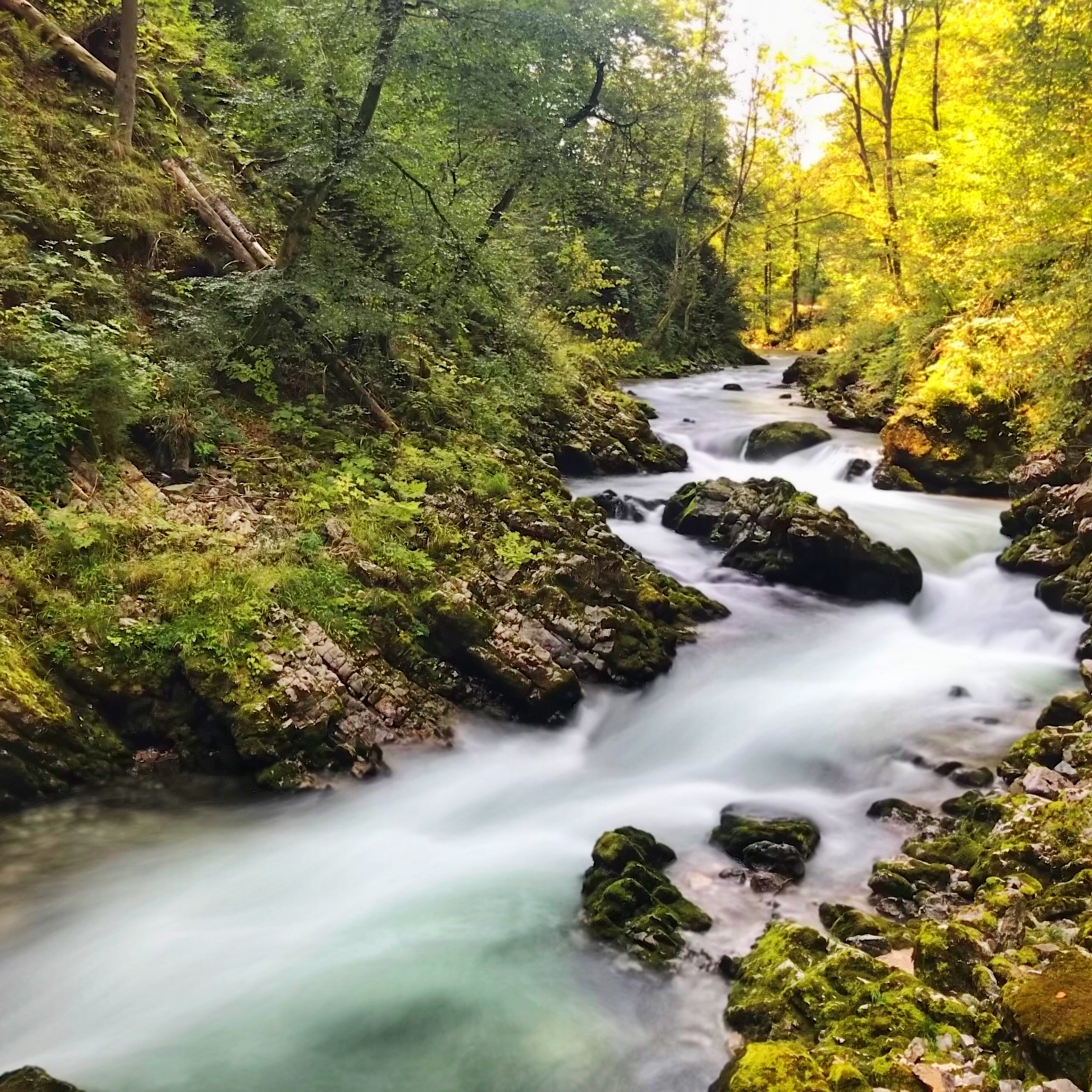 "- In the Radnova Valley, about 1.5 hours from Ljubljana, near Bled, runs the very active portion of the Radnova River, Vintgar Gorge. The canyon walls run from 50 to 100 meters. At 1.6km long, the gently undulating walkway brings you close to the action: raging rapids, breathtaking falls, and picnic-friendly rocks, all for €5. Your pup is welcome also! Parking is available and free but you'll do more strenuous walking from the lots to the entrance than you will along the gorge itself. One kink: once you've reached the end, the only way out is to turn around and go back from whence you came. So on the upside, you get to see this beautiful water feature twice, but on the down side, you're swimming against the current of people. Just prepare yourself and learn how to say ""Excuse me,"" in Slovenian because you'll be using it a lot. By the way, it's ""Oprostite prosim,"" if you'd like to start practicing now."