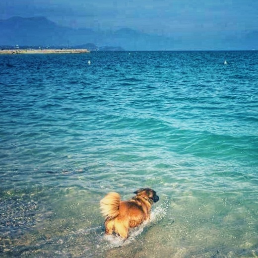 Chelsea was the only one brave enough for a dip in Lake Garda