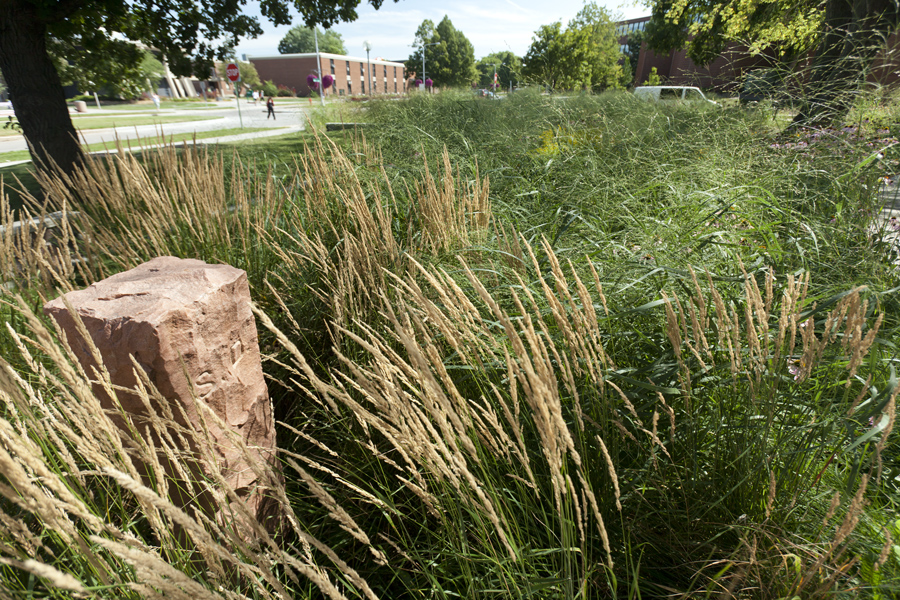 Native grasses and other natural vegetation give the garden a tranquil atmosphere