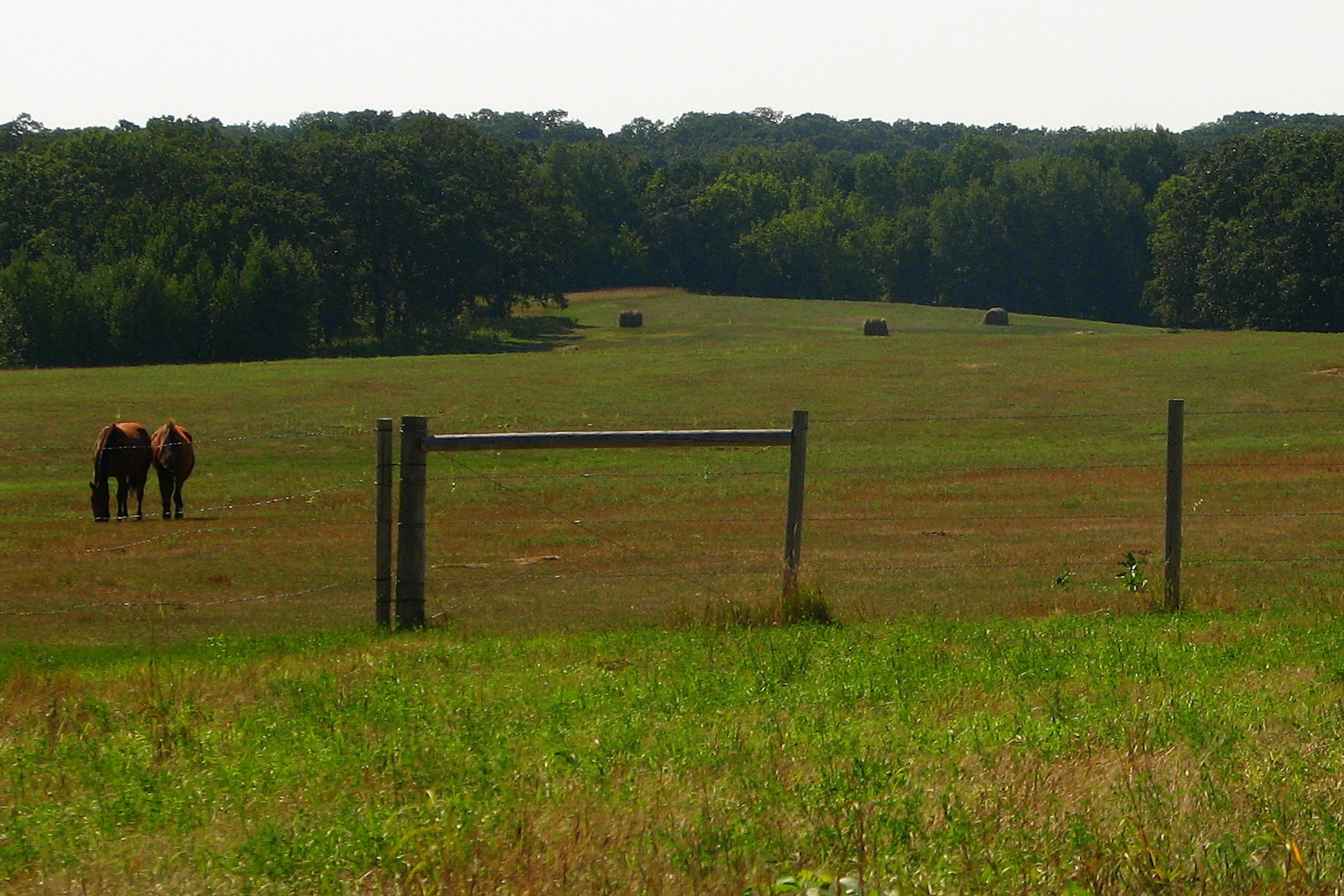 Pelican Lake Farm features miles of trails, native meadows, Minnesota woodlands, and equine specific programmed areas.