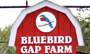 bluebird.jpeg