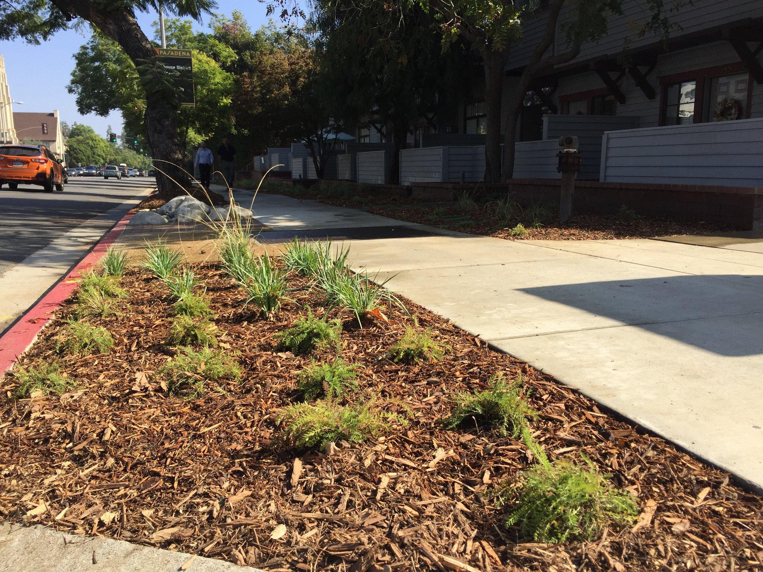parkway plants.jpg