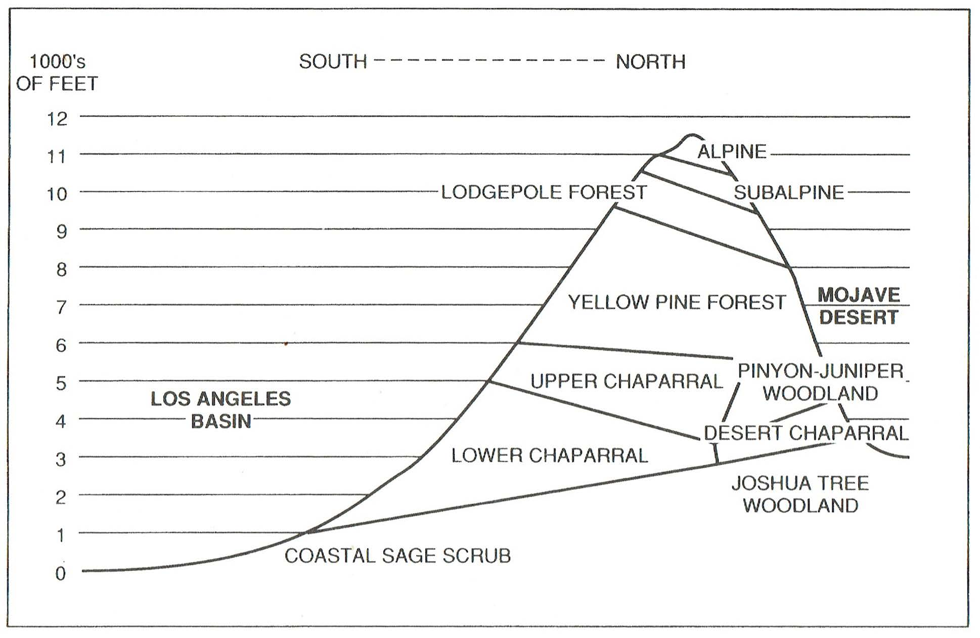 The chaparral, in the Los Angeles Basin. Image courtesy of A Natural History of California by Allan A Schoenherr