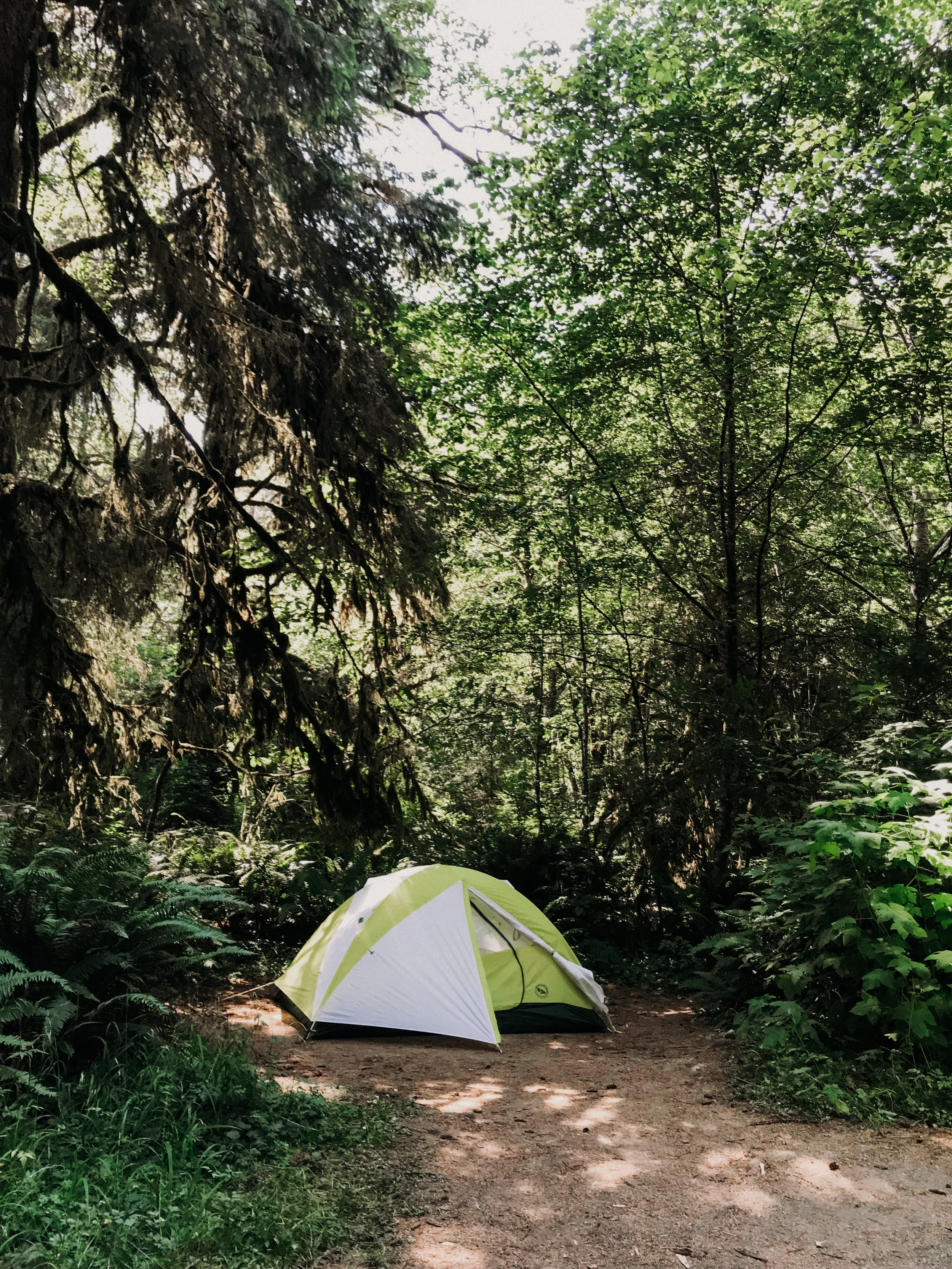 Camping at Prairie Creek Redwoods State Park (loved this campground so much! This little tent was home for most of the trip.