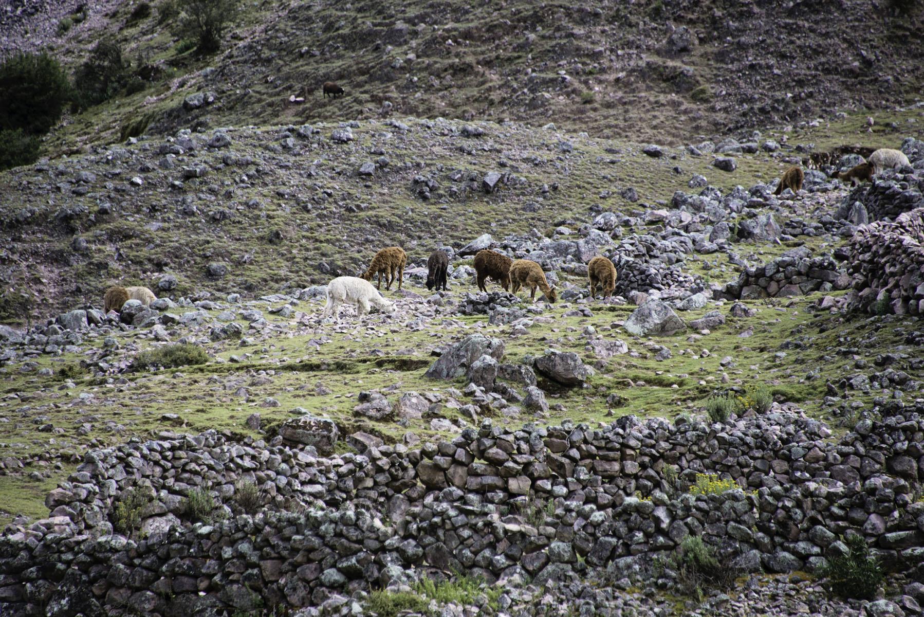 375-Peru-5-15_web.jpg