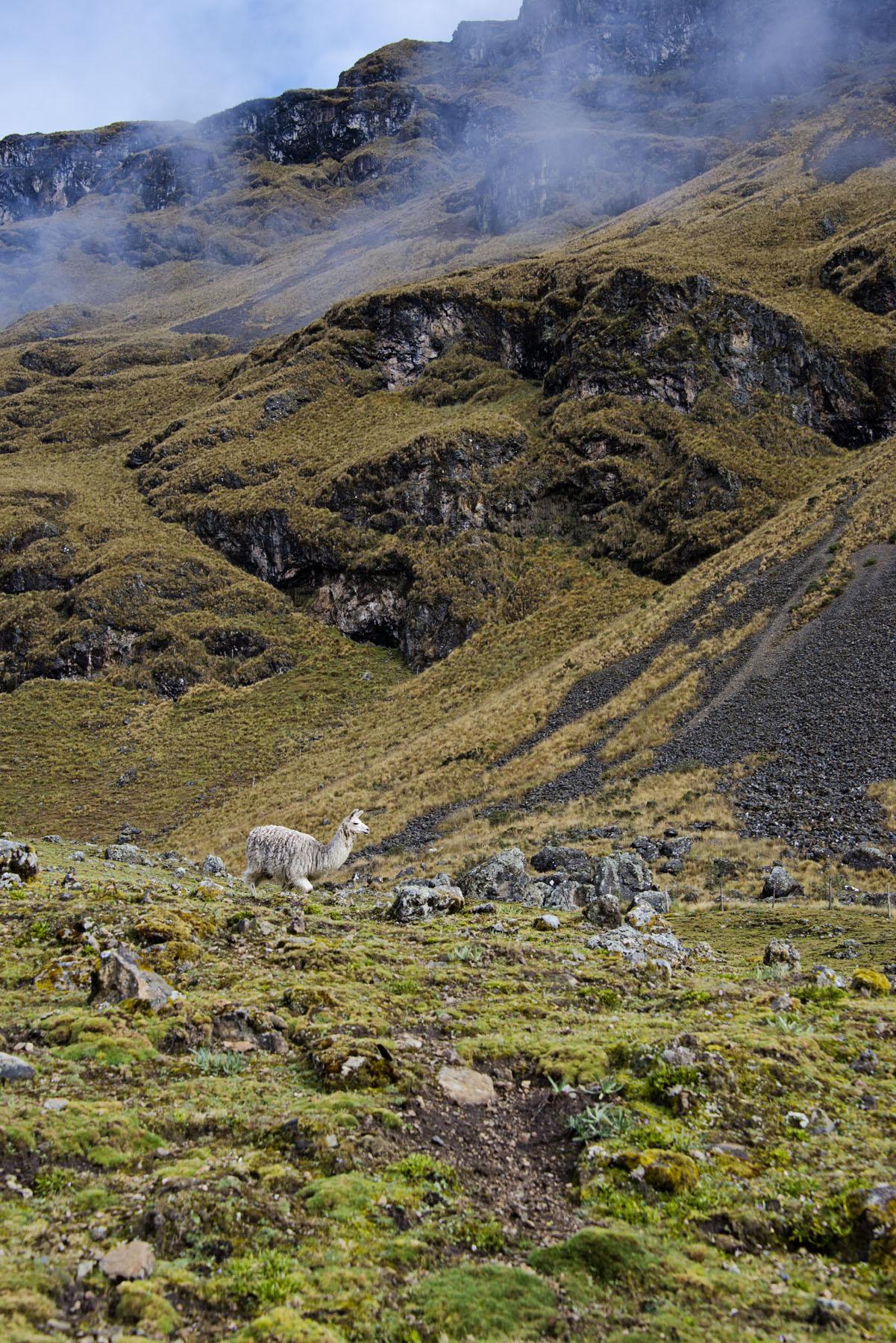 190-Peru-5-15_web_web.jpg