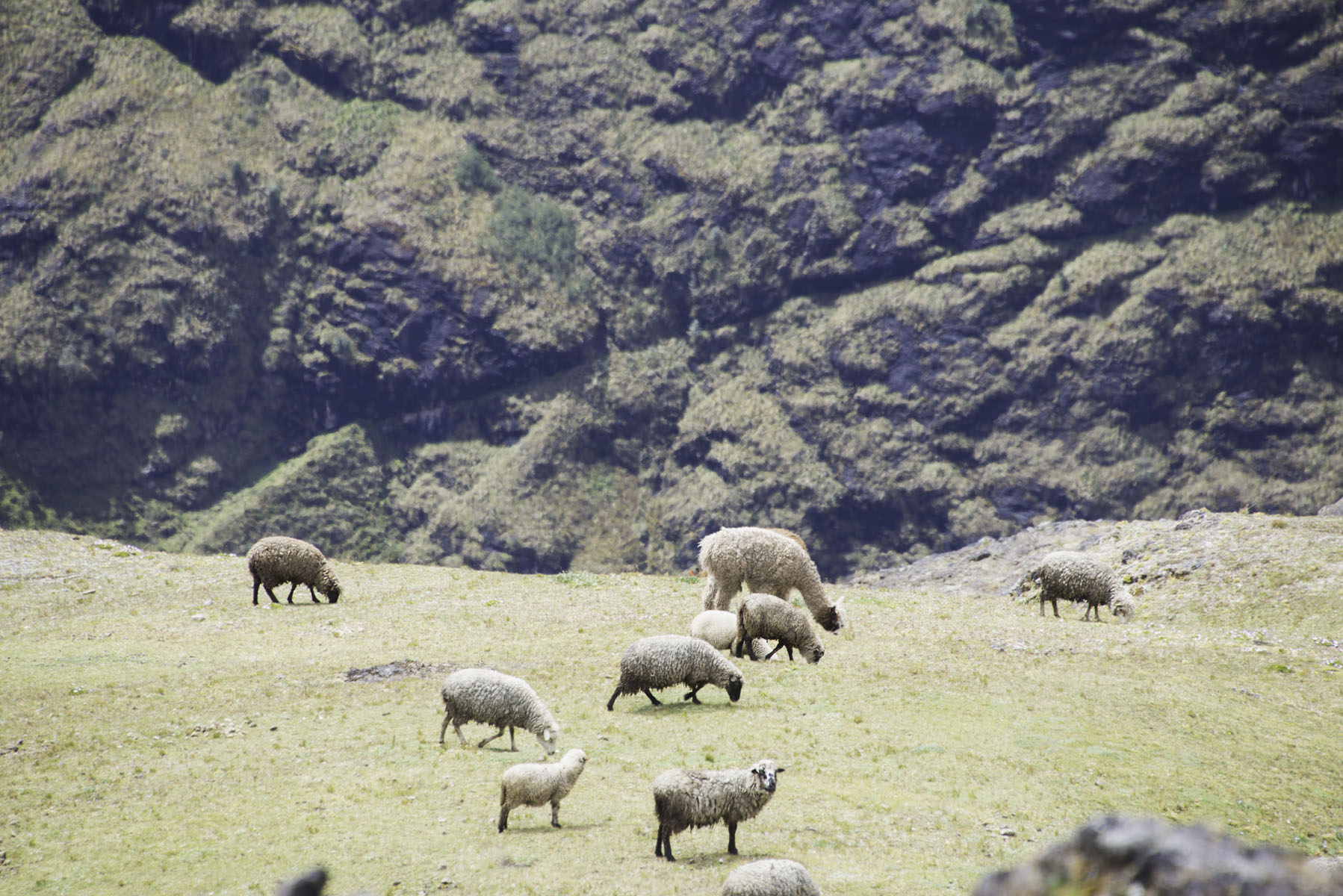 277-Peru-5-15_web.jpg