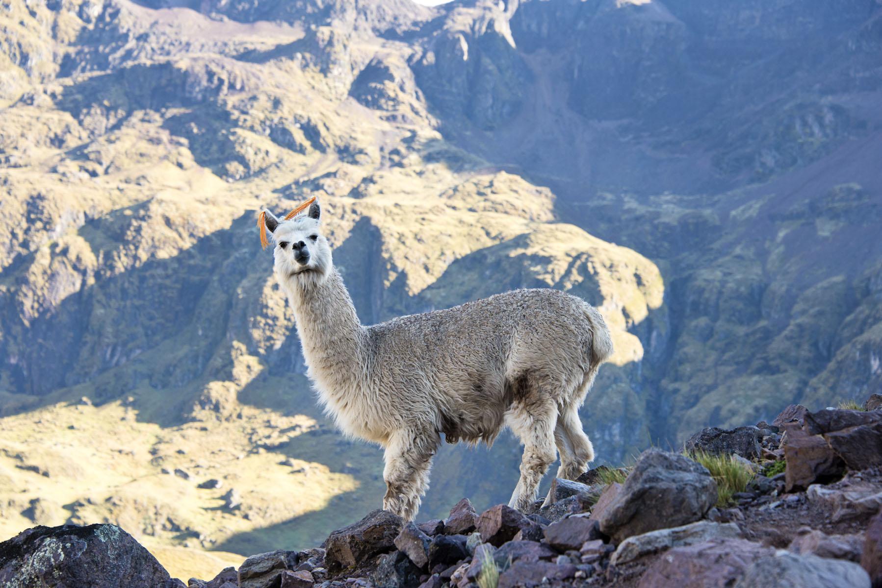 228-Peru-5-15_web.jpg