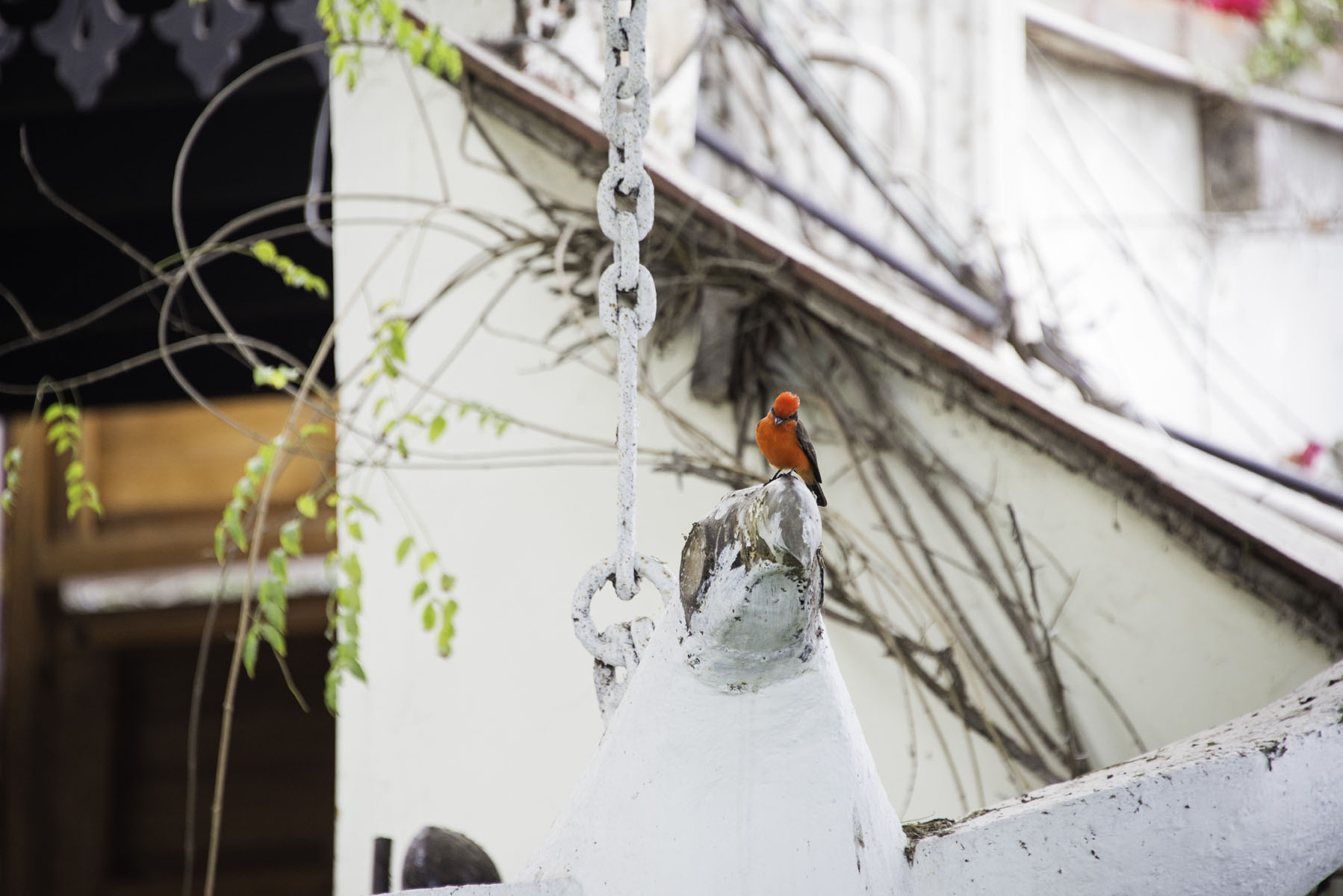 Red Bird at Second Home Peru Hotel in Lima