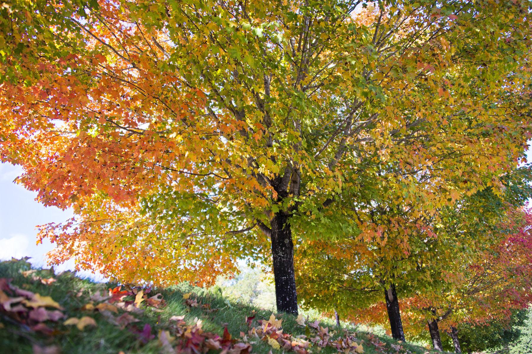 Colorful Fall Tree Foliage