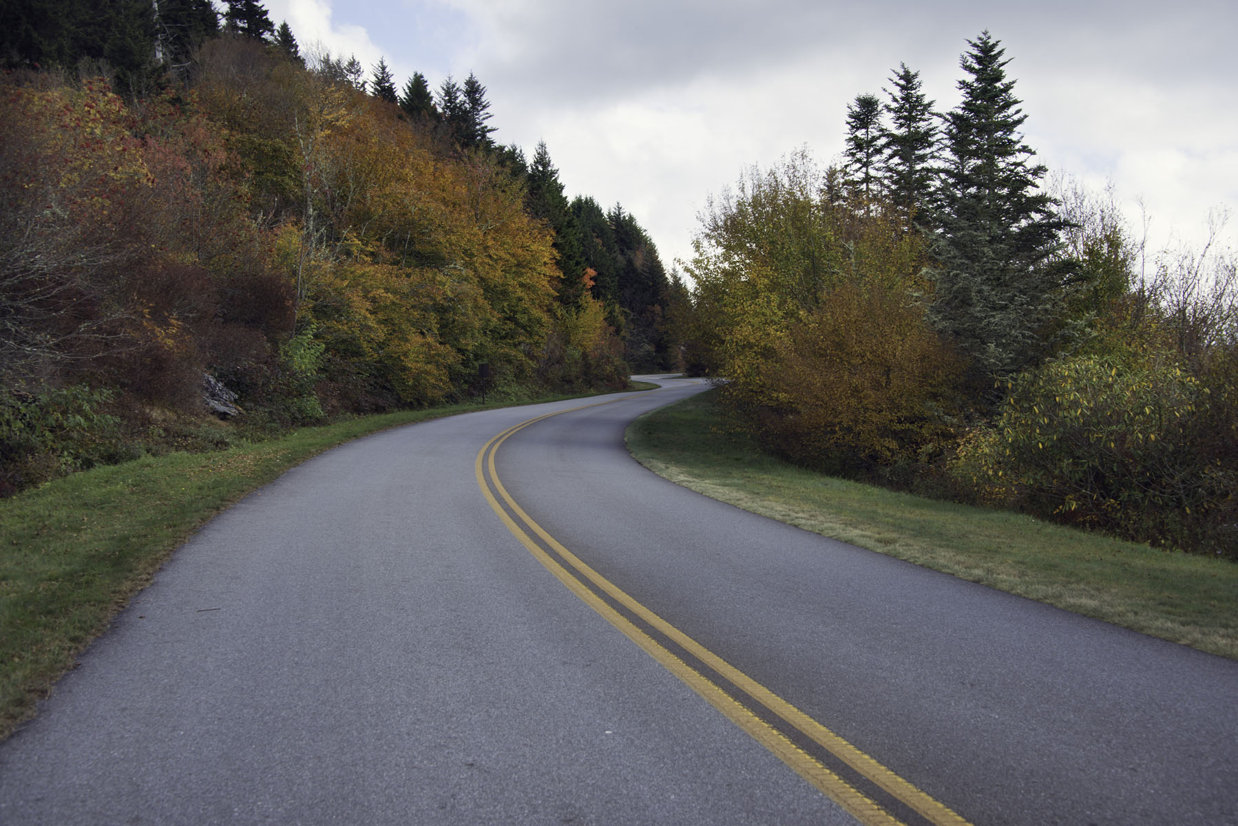 Winding Road in the Woods on the Blue Ridge Parkway