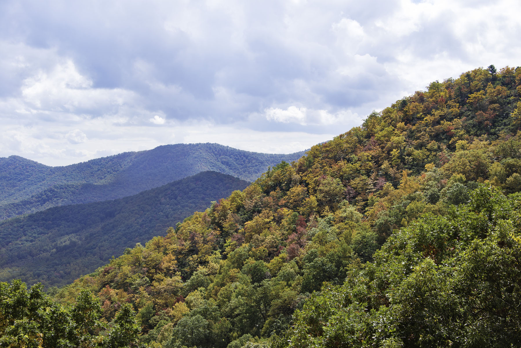 Close Up of Fall Foliage in Smoky Mountains on Blue Ridge Parkway