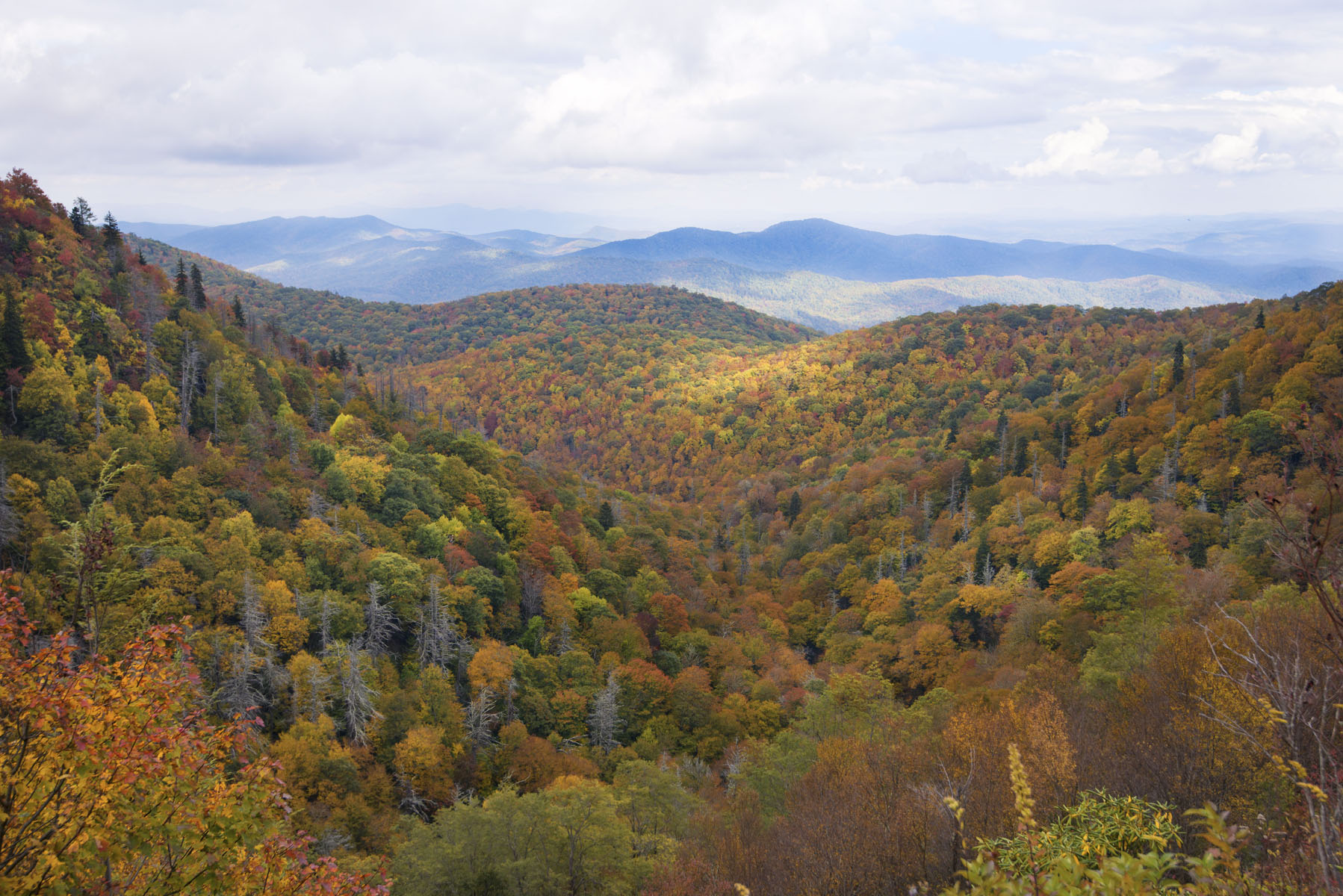 Colorful Fall Foliage in Smoky Mountains on Asheville Blue Ridge Parkway