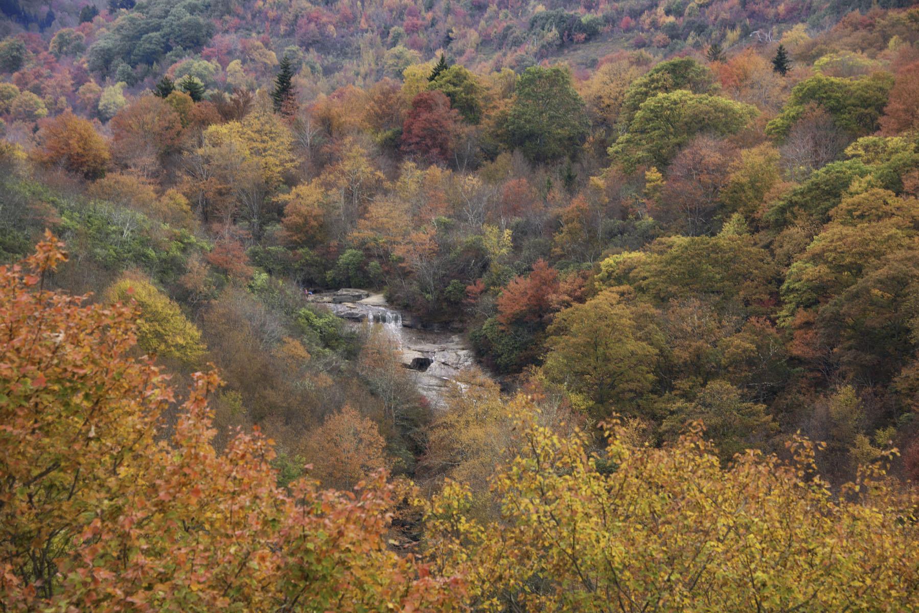 Fall Foliage at Yellowstone Falls Waterfall on Blue Ridge Parkway