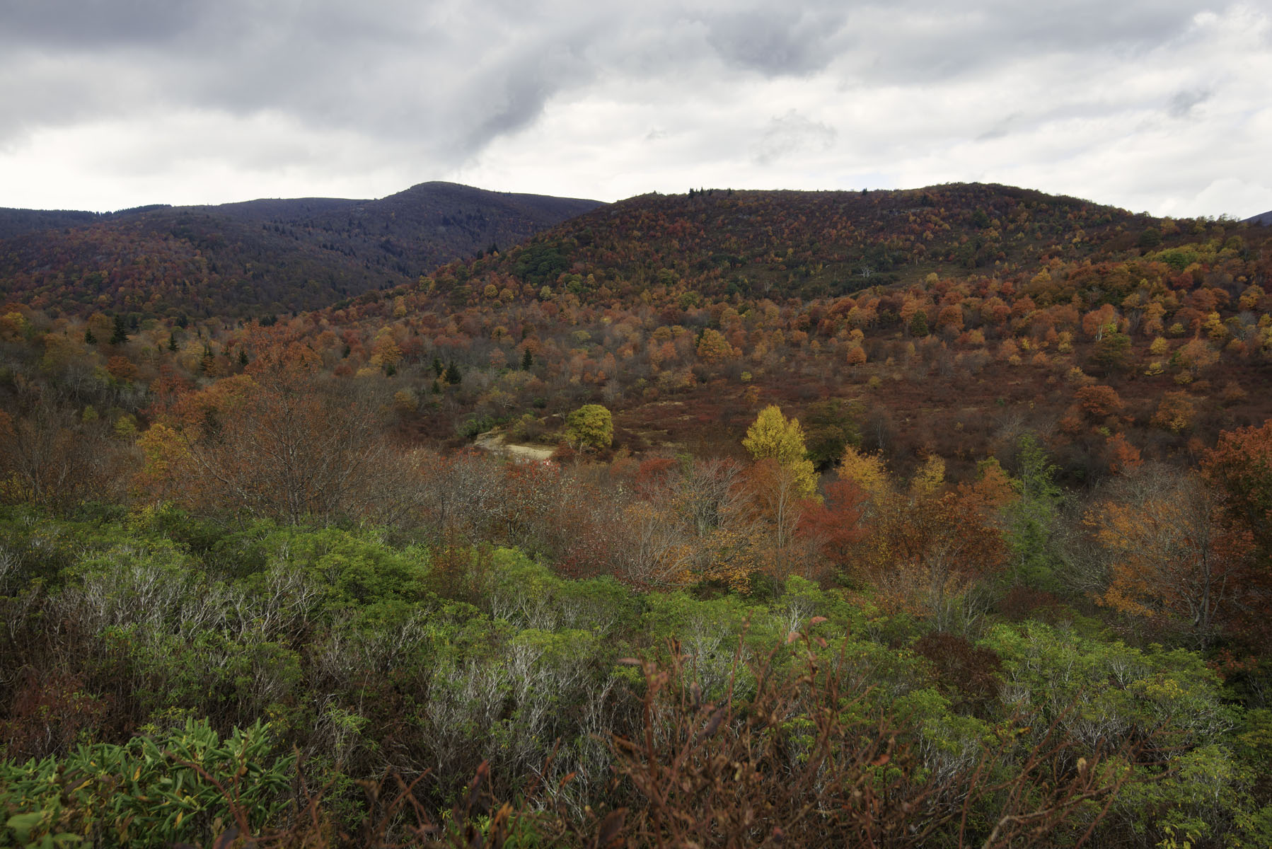 Red Fall Foliage at Graveyard Fields on Blue Ridge Parkway Near Asheville